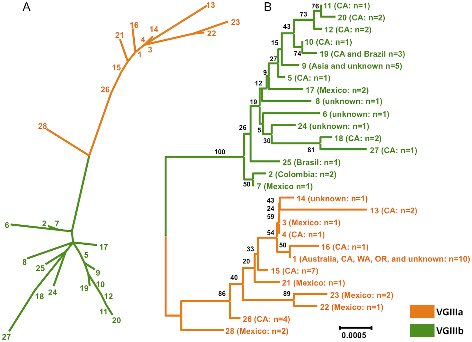 Clustering and phylogenetic analyses of global VGIII isolates reveals two well-supported lineages and one intermediate genotype.
