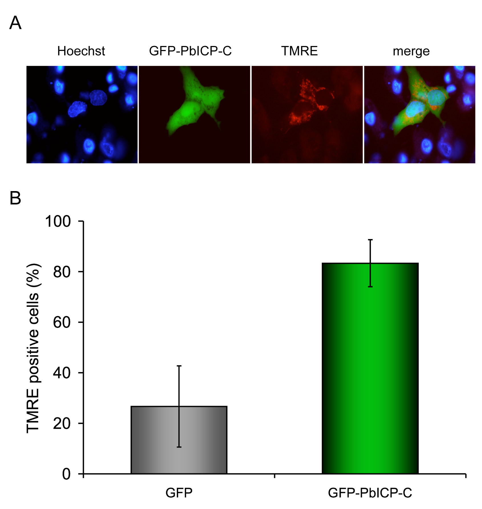 PbICP-C expression protects HepG2 cells against host cell death.