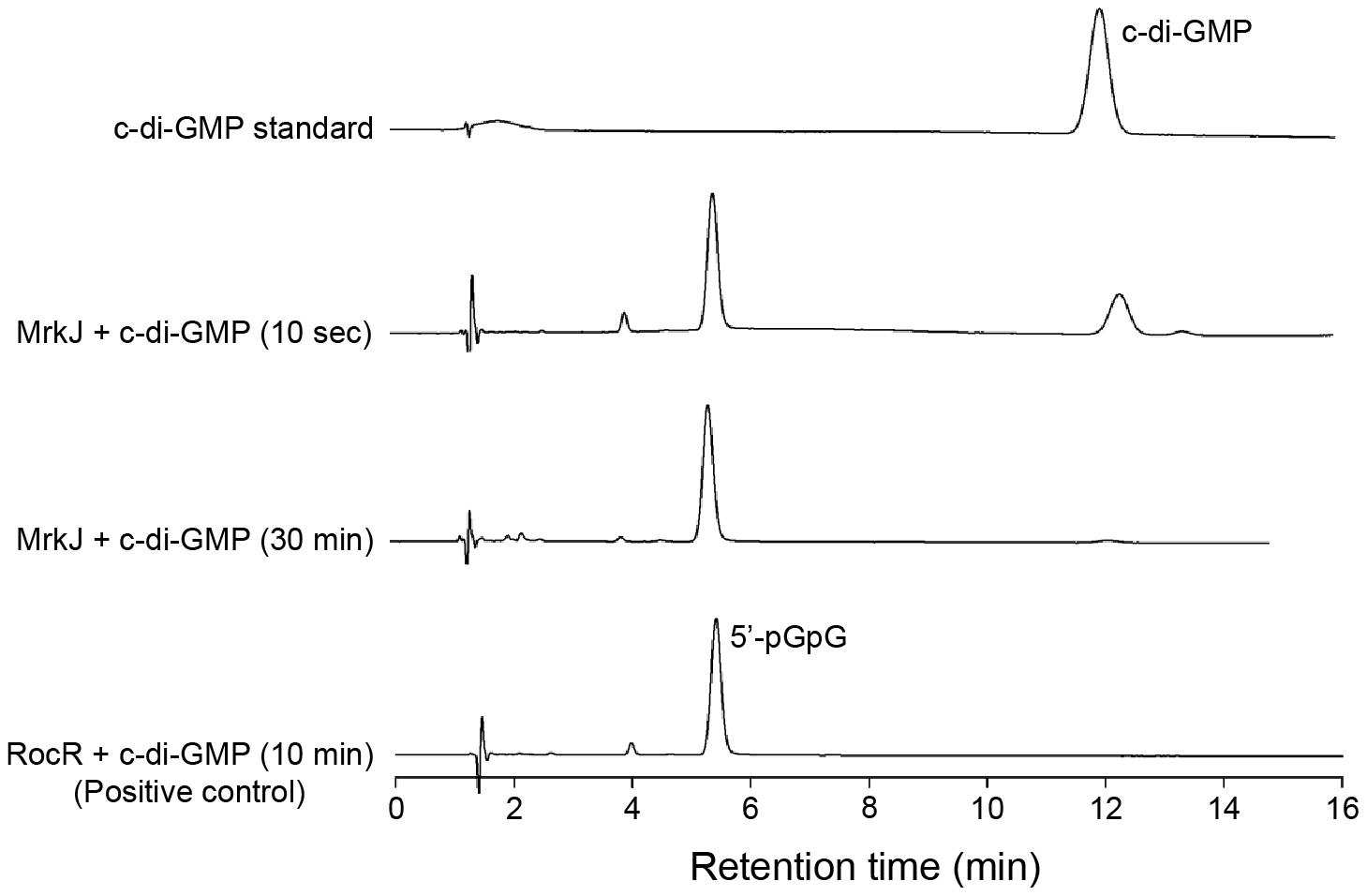 MrkJ displays strong phosphodiesterase activity.