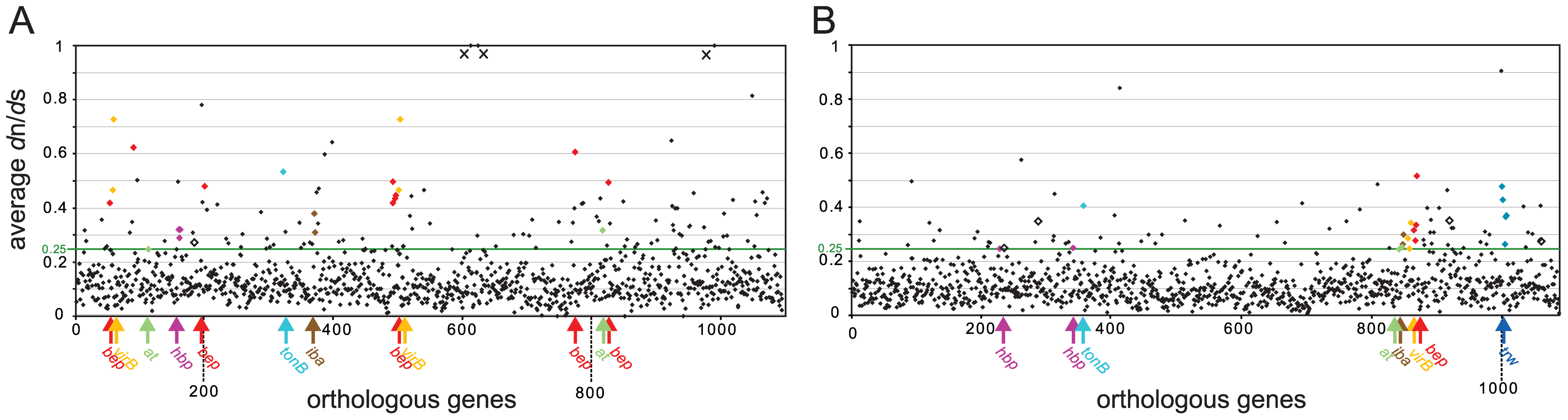 Gene-wide <i>d</i>n/<i>d</i>s analysis of the core genomes of the two radiating lineages.