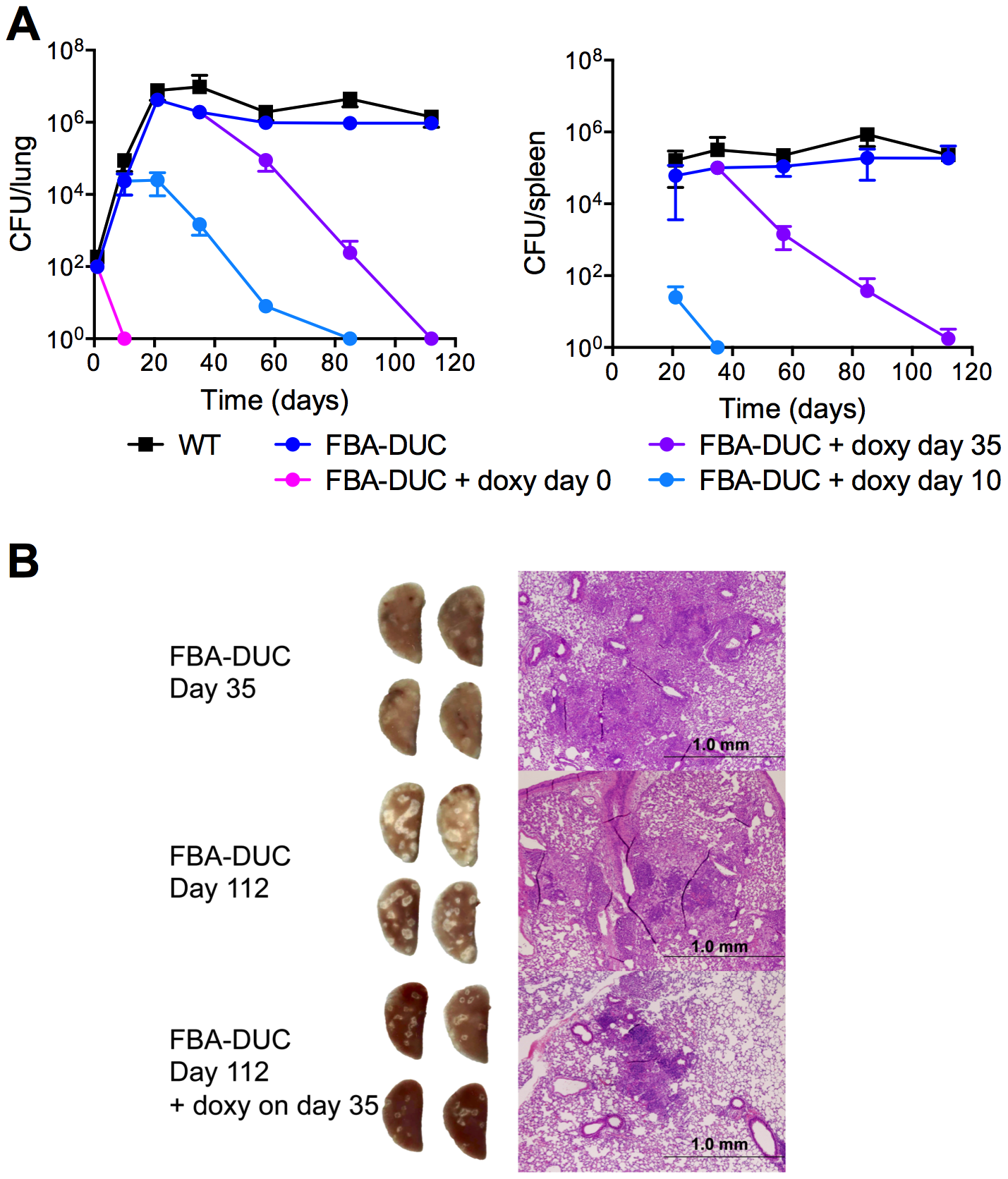 FBA is required for replication and persistence of <i>Mtb</i> in mice.