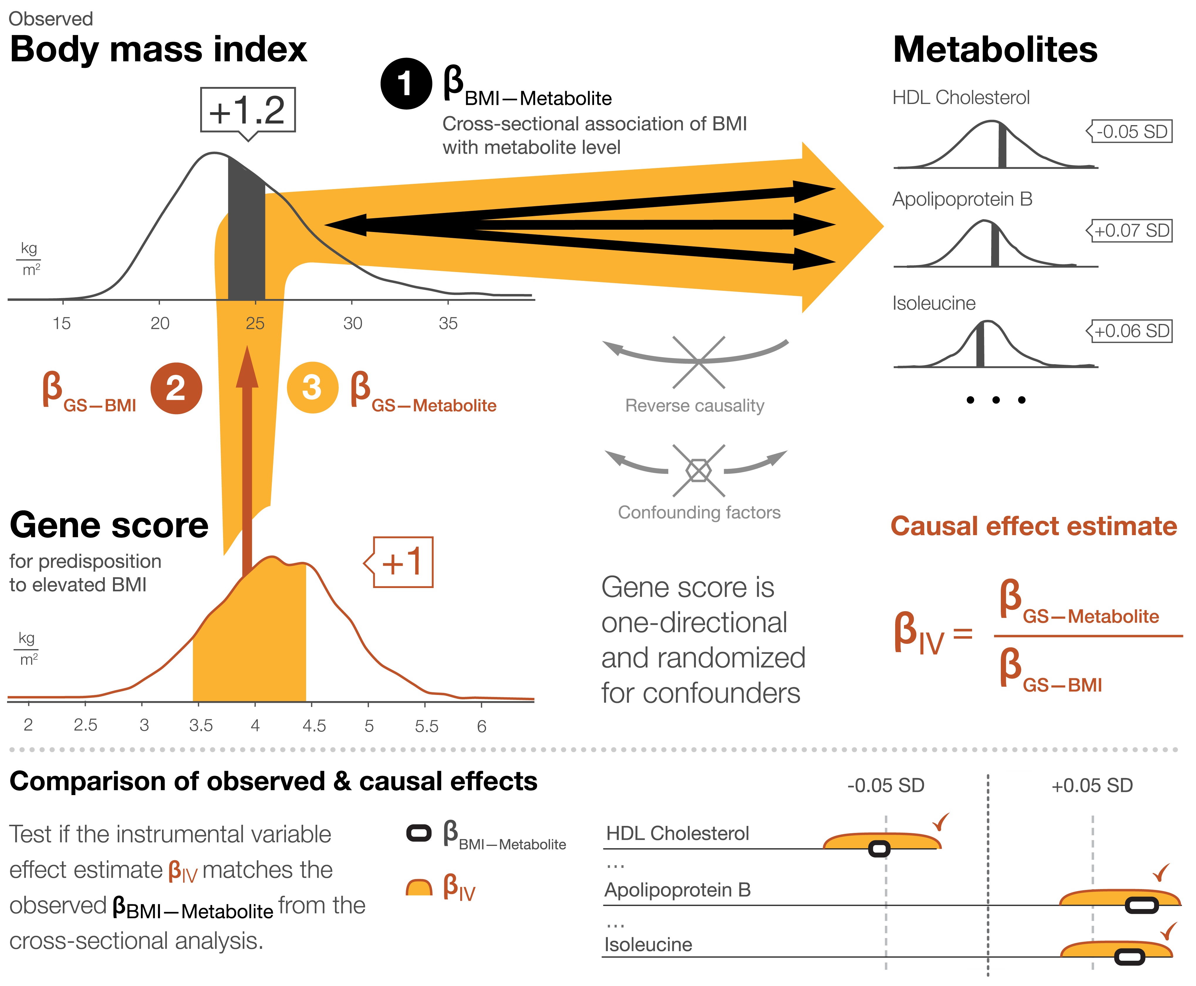 Mendelian randomization framework for estimating causal effects of BMI on the systemic metabolite profile.