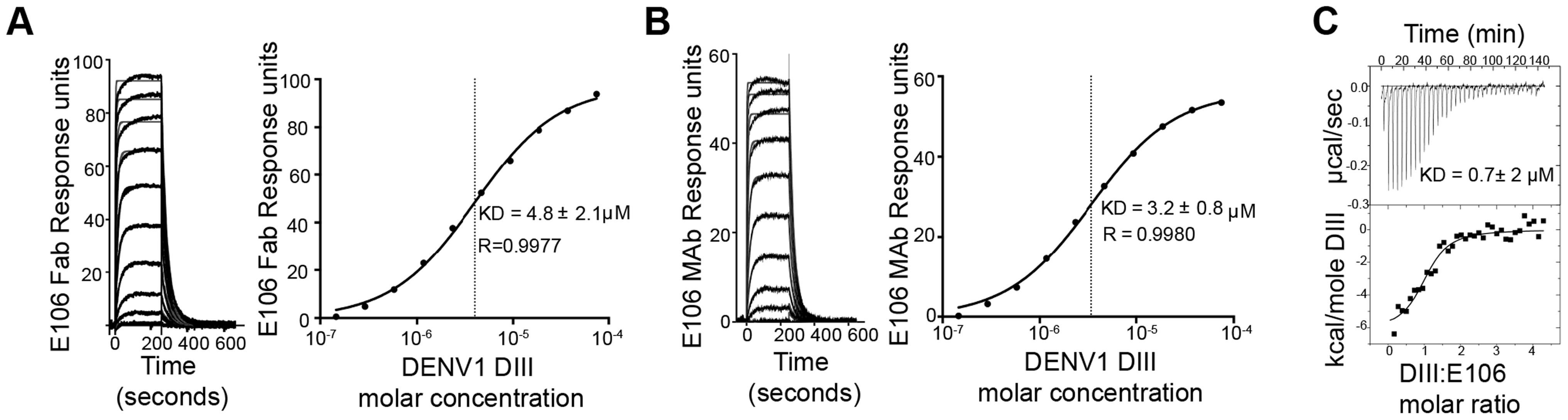 E106 Fab and MAb binds with low affinity to DENV-1-DIII.