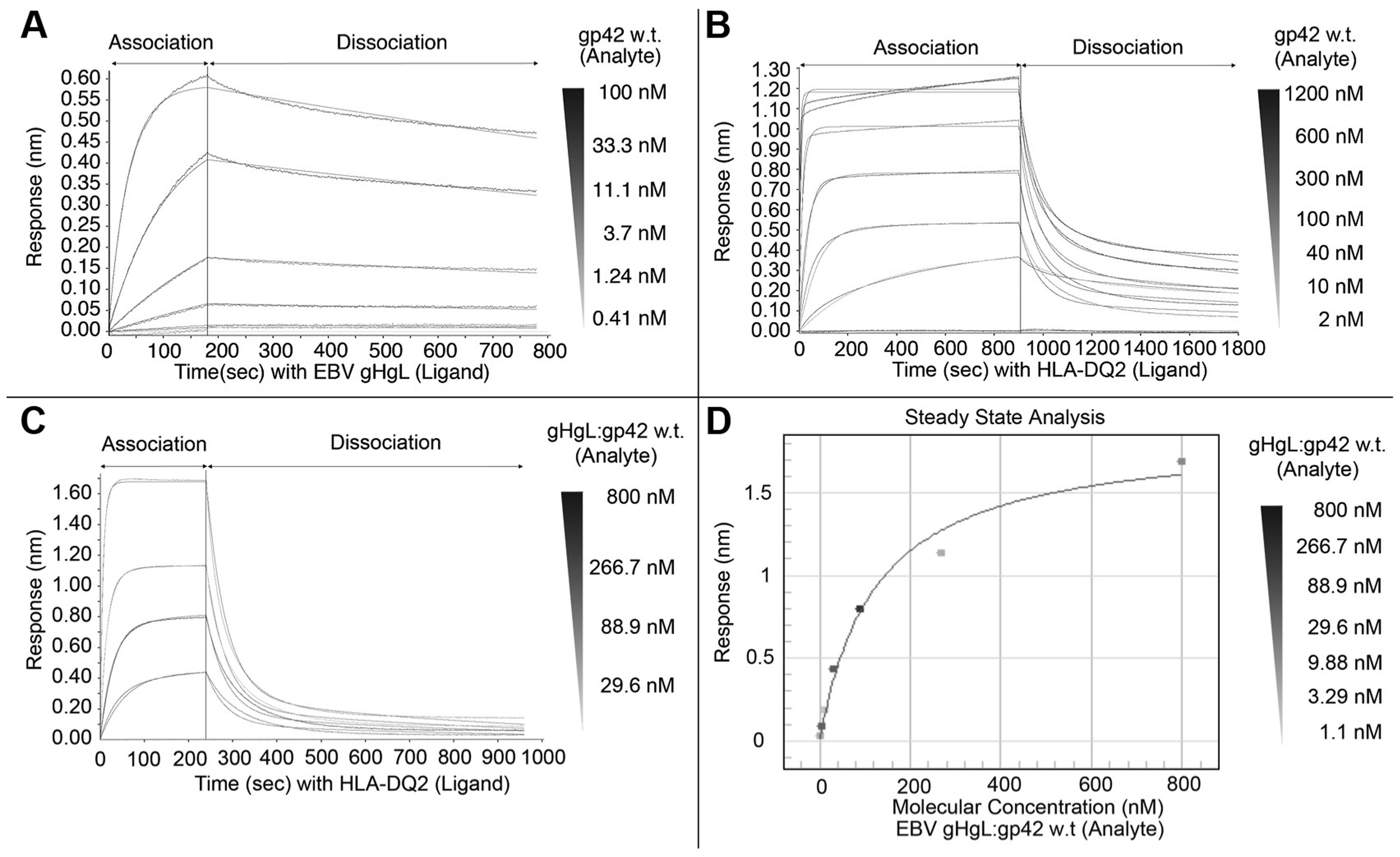 BioLayer interferometry (BLI) binding studies with wildtype gp42.