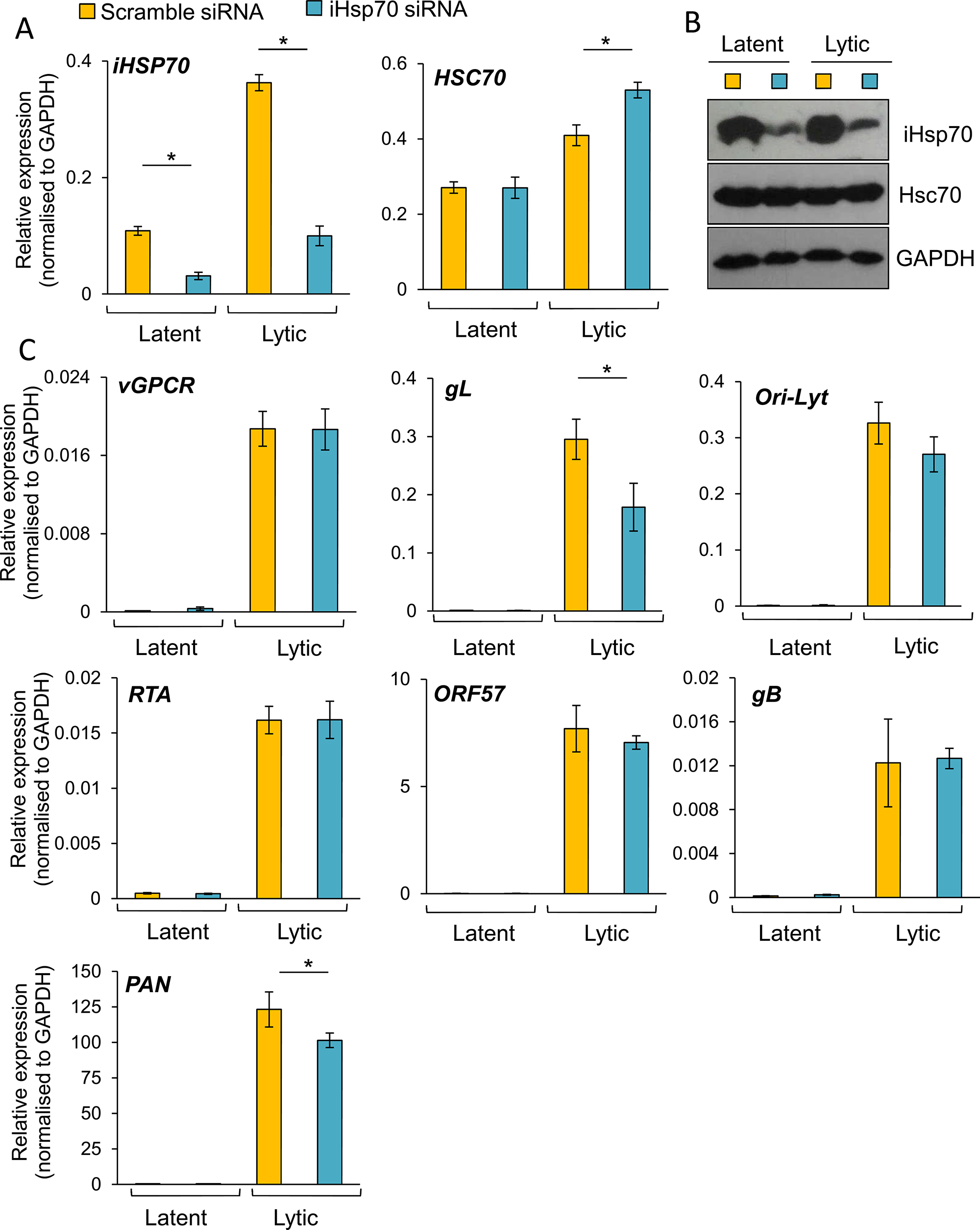 The majority of KSHV lytic gene expression was unaffected following specific depletion of iHsp70 in HEK-293T rKSHV.219 cells.