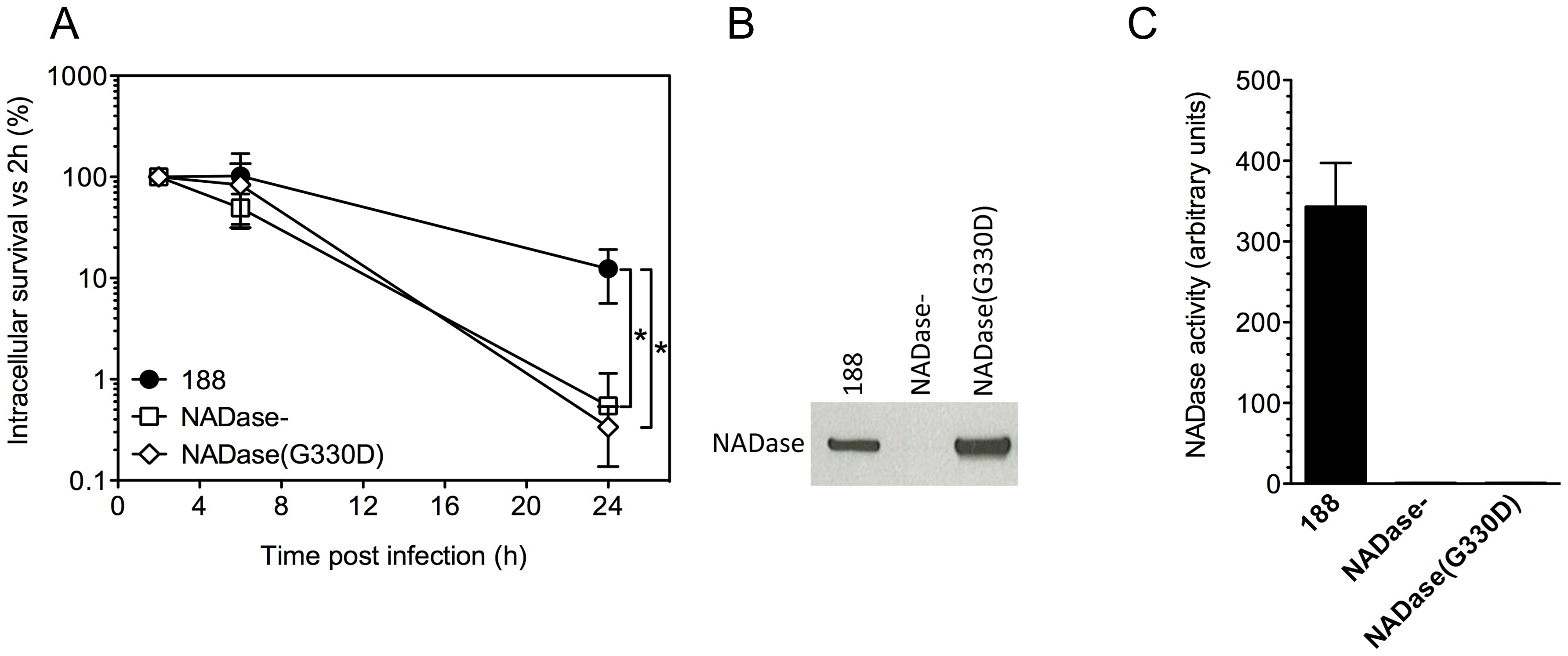 Expression of active NADase plays a central role in the intracellular survival of GAS in oropharyngeal keratinocytes.