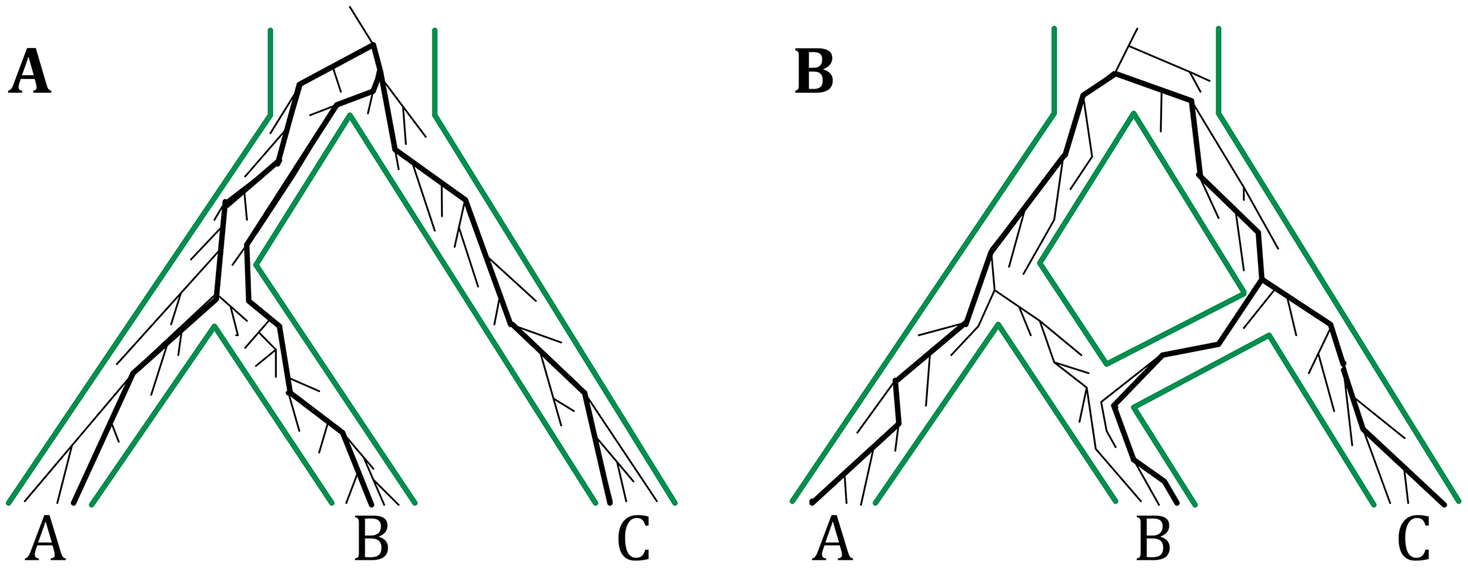 The multispecies coalescent on trees and networks.