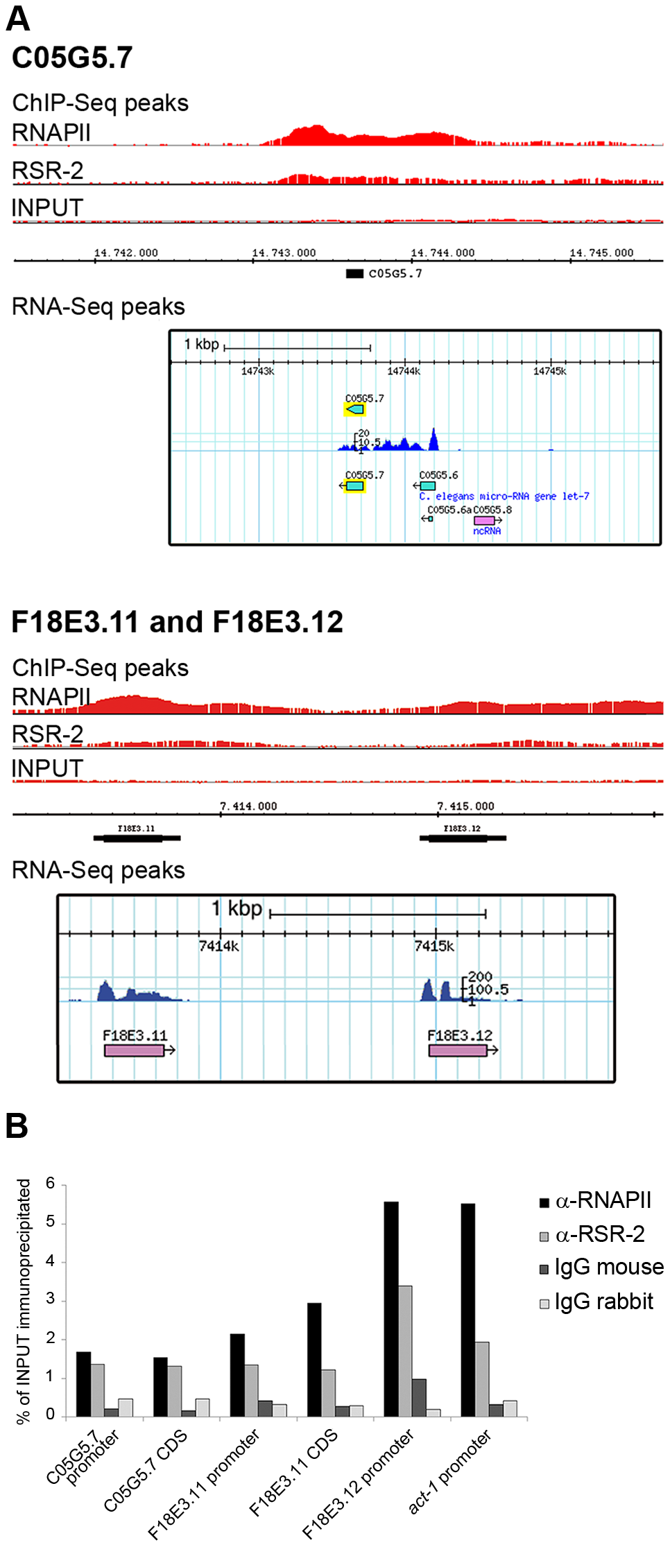RSR-2 binds to intronless genes.