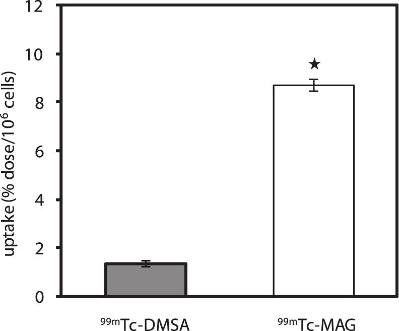 Fig. 1. Uptake of <sup>99m</sup>Tc-MAG3 and <sup>99m</sup>Tc-DMSA in the isolated rat renal cells following 30 min incubation at 37 °C (mean ± S.D.) (* = significant difference at P < 0.05)