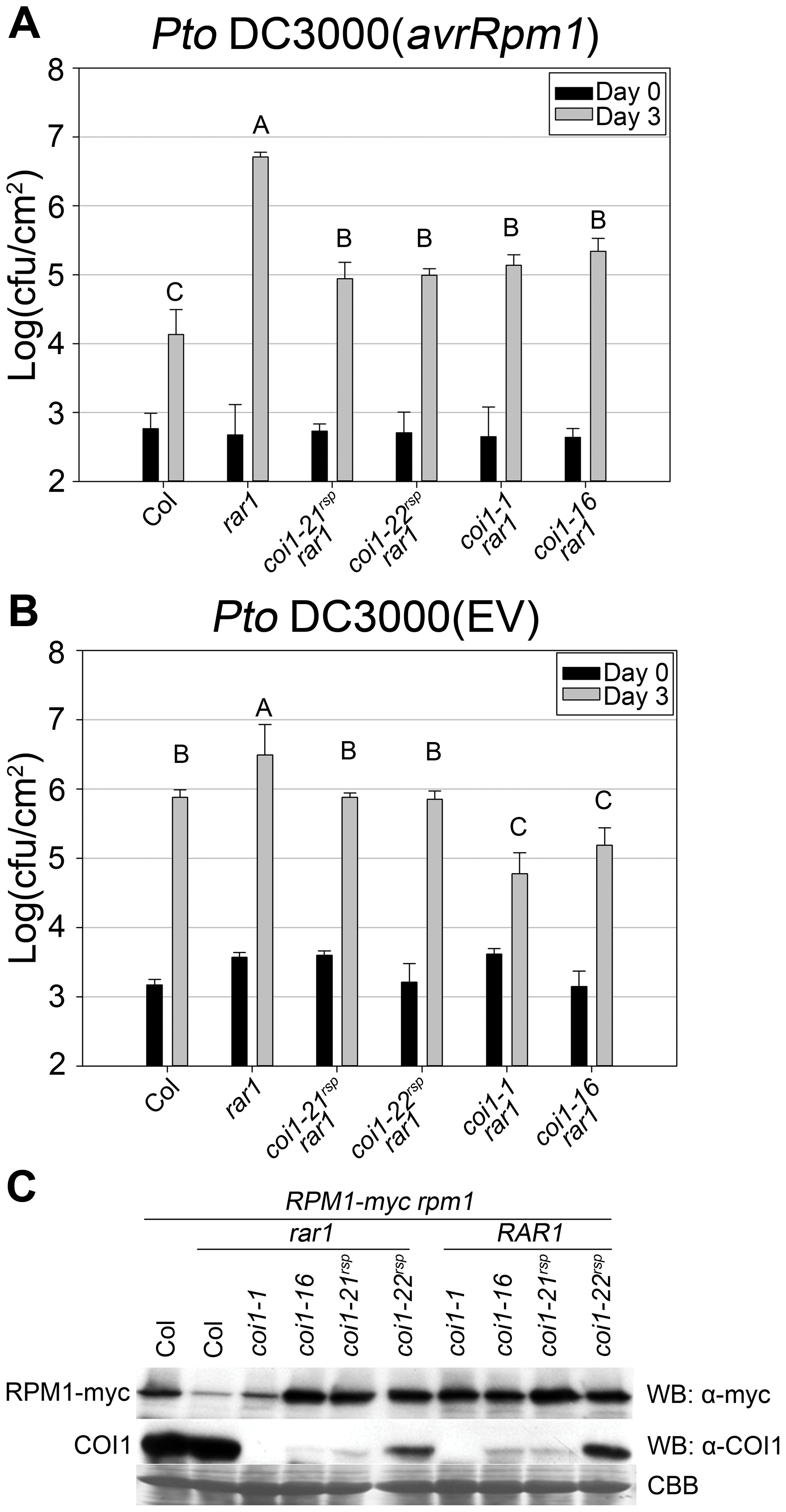 <i>coi1<sup>rsp</sup></i> mutants suppress <i>rar1</i> phenotypes and are not null allele.