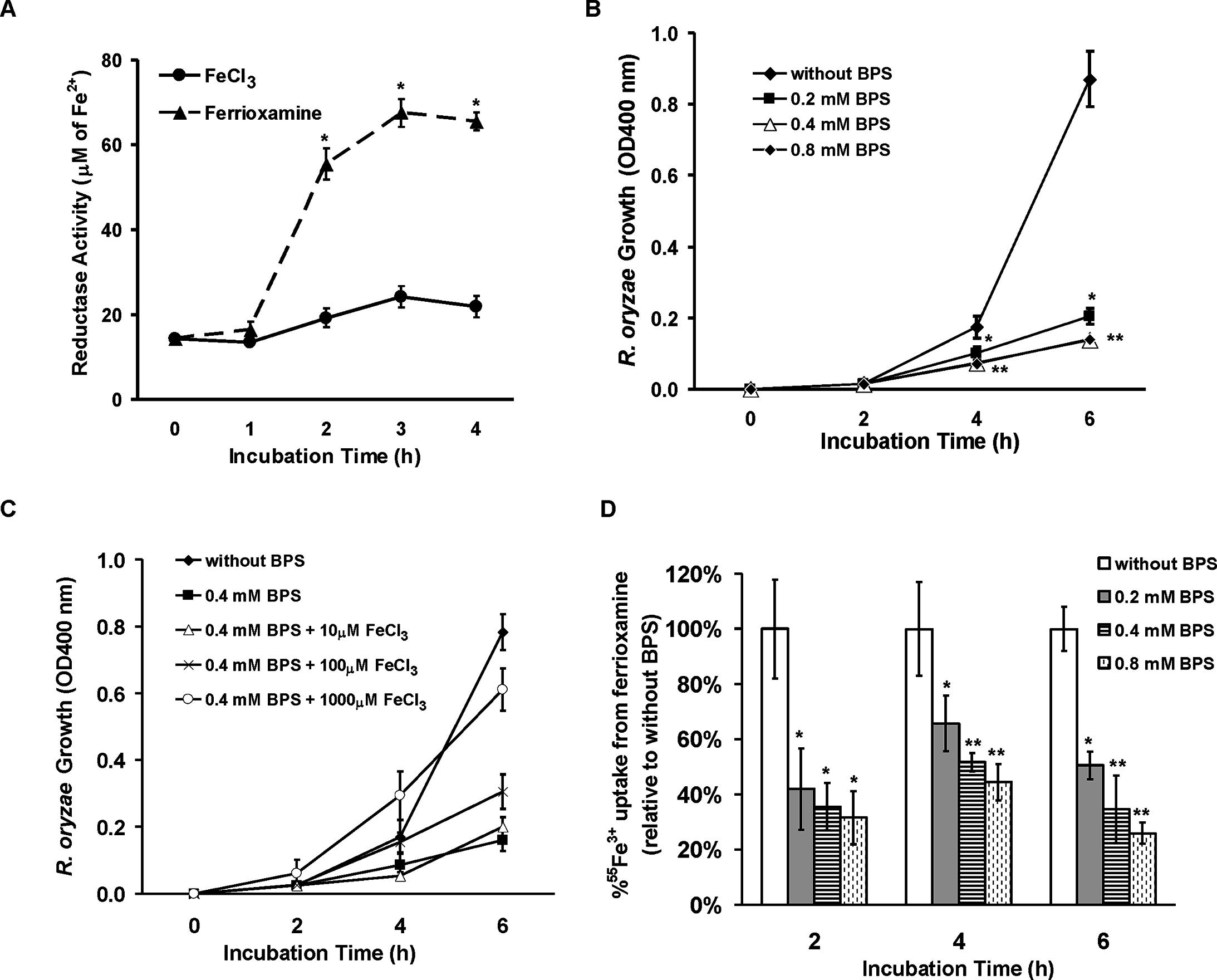 <i>R</i>. <i>oryzae</i> iron uptake from ferrioxamine is mediated by reductase activity.