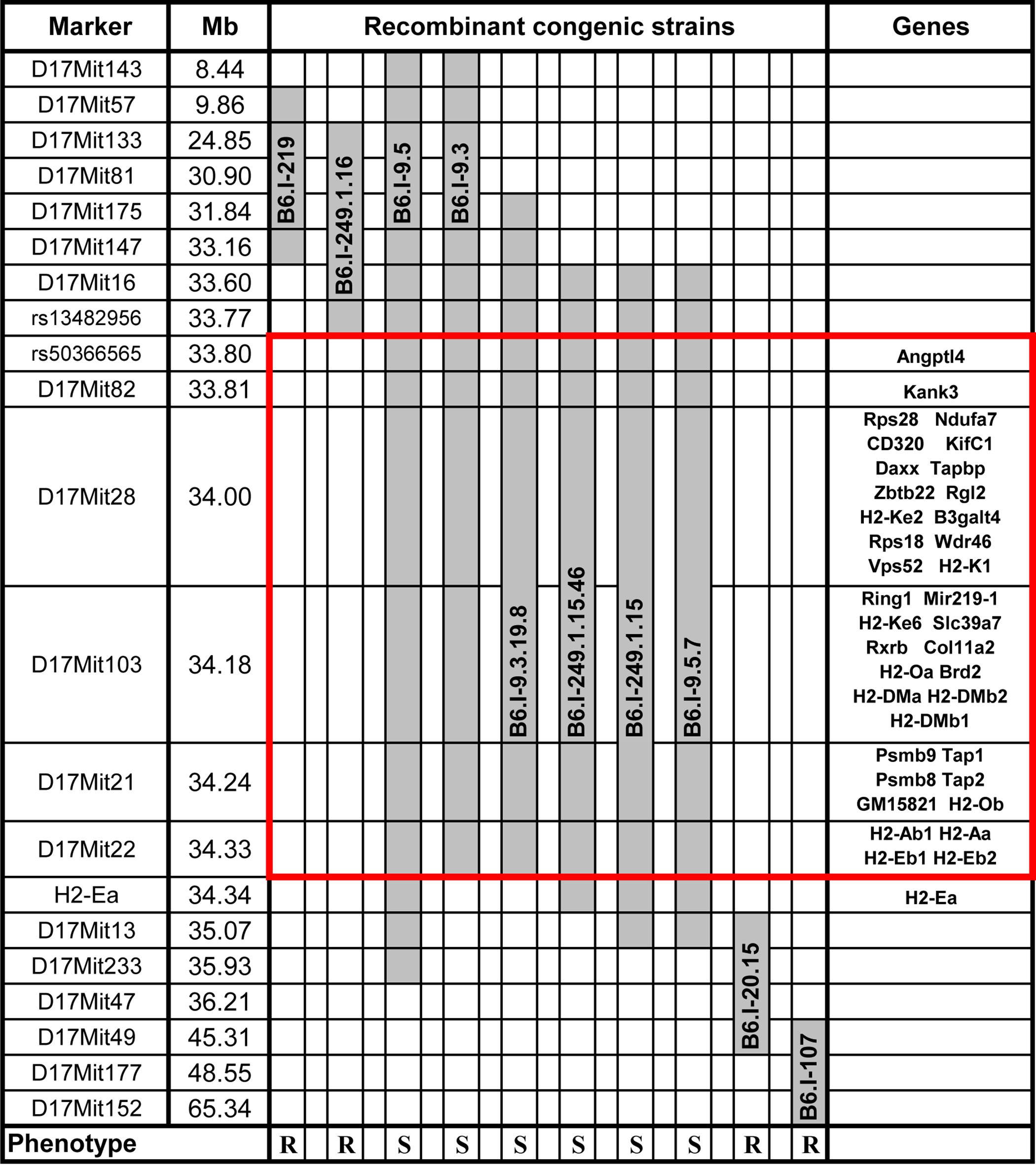 Chart of the extended <i>H2</i> genomic region in novel recombinant congenic strains.