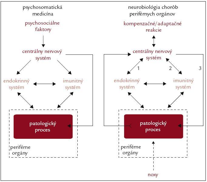 Schematické znázornenie konceptu psychosomatickej medicíny a neurobiológie chorôb periférnych orgánov. V koncepte psychosomatickej medicíny zohráva kľúčovú úlohu pôsobenie psychosociálnych faktorov (napr. stresory), ktoré prostredníctvom nervových, neuroendokrinných a neuroimunitných mechanizmov negatívne ovplyvňujú priebeh patologických procesov prebiehajúcich v periférnych orgánoch. V koncepte neurobiológie chorôb zohráva kľúčovú úlohu prenos signálov súvisiacich s patologickým procesom do centrálneho nervového systému. Pokiaľ pôsobiace noxy (napr. patogény, ischémia, mechanické, termálne alebo radiačné faktory) prekročia adaptačné schopnosti orgánu, dôjde k vzniku patologického procesu, ktorý podmieňuje vznik choroby. Signály, súvisiace s patologickým procesom (napr. nekróza buniek sprevádzaná uvoľnením intracelulárnych látok, ischémia sprevádzaná aktiváciou imunitných buniek a zmenou lokálneho pH), sú prenášané nervovými a humorálnymi dráhami do centrálneho nervového systému. Po spracovaní týchto signálov dochádza k aktivácii kompenzačných a adaptačných mechanizmov, pričom centrálny nervový systém prostredníctvom neuroendokrinných (1) a neuroimunitných (2) interakcií, ako aj priamo prostredníctvom autonómnej inervácie (3), ovplyvňuje priebeh danej choroby.