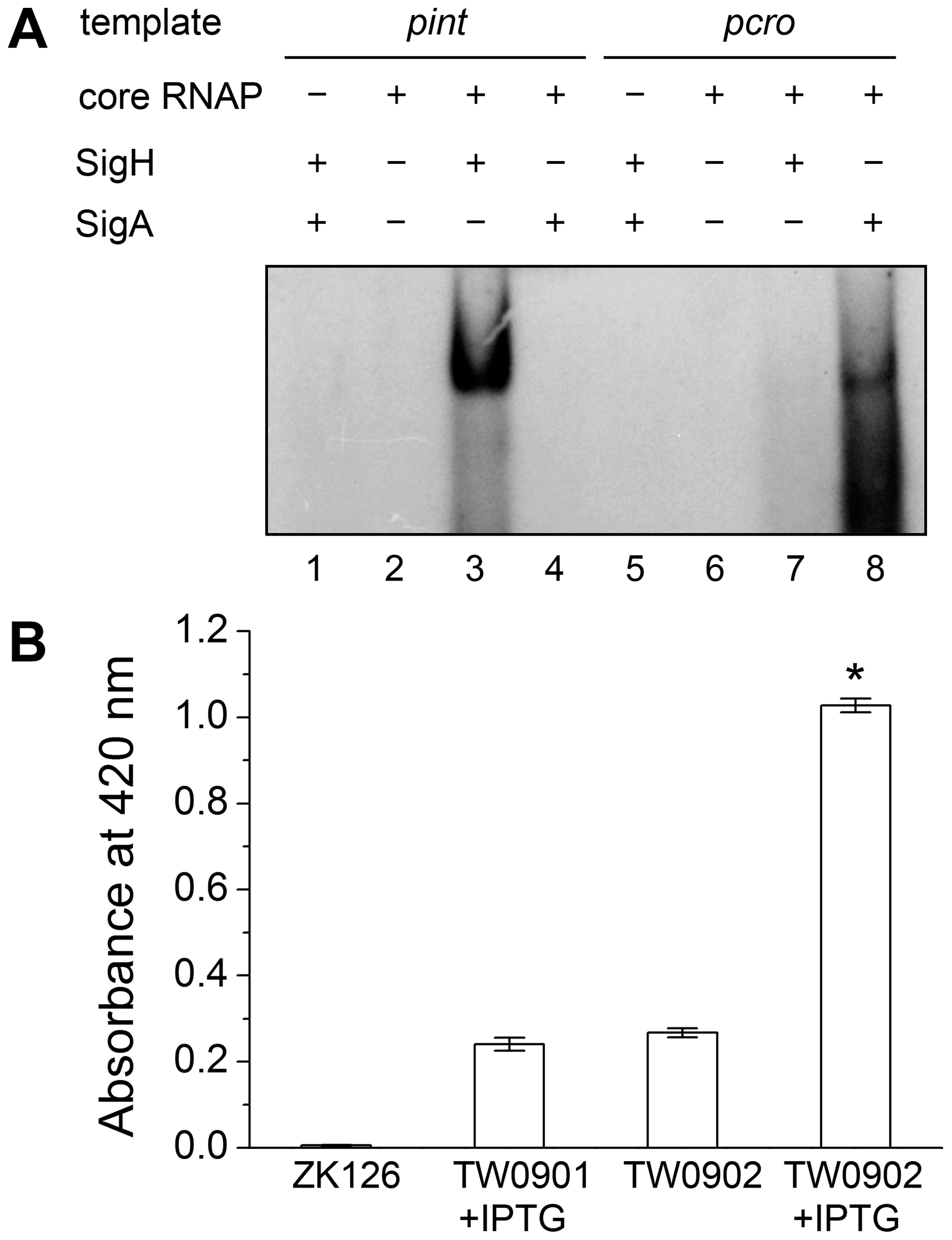 Direct evidence of σ<sup>H</sup>-dependent transcription from <i>pint</i> is observed both <i>in vitro</i> and <i>in vivo</i>.