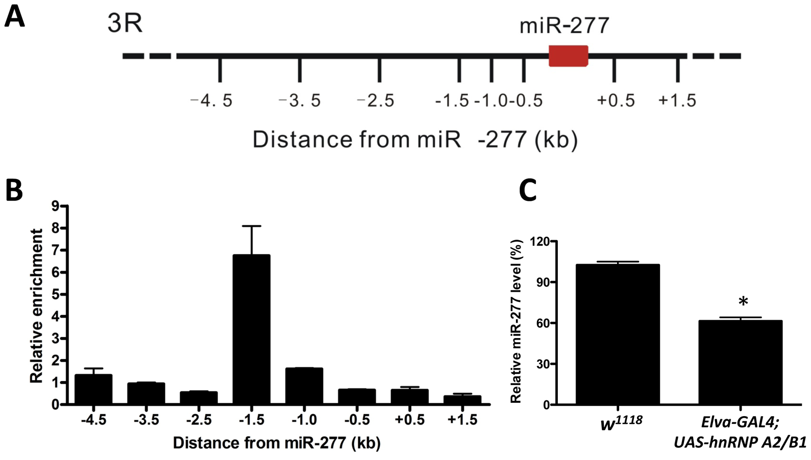 Expression of miR-277 is regulated by hnRNPA2/B1.