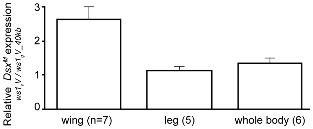 Change in <i>doublesex</i> expression due to <i>ws1.</i>