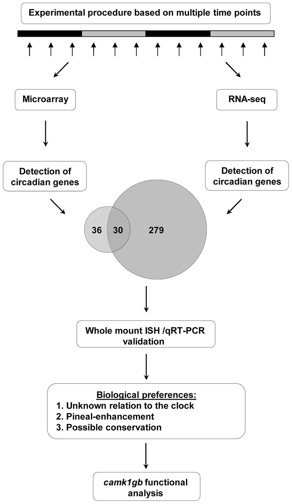 A step-by-step flow-chart of the systematic identification of pineal gland circadian genes.