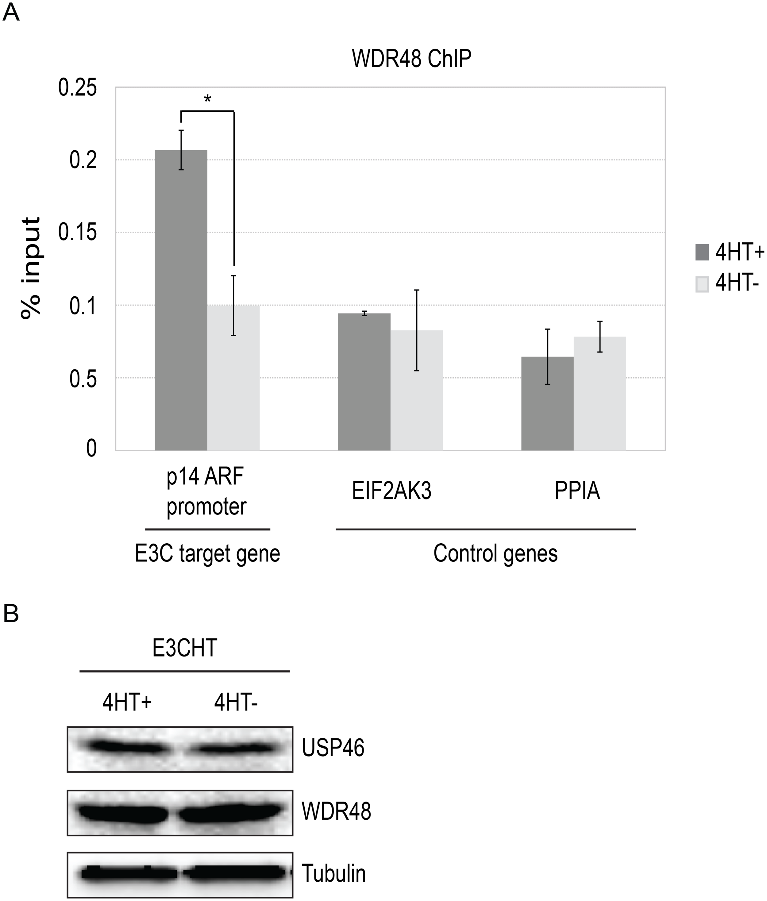 ChIP assay for WDR48 at the p14ARF promoter.