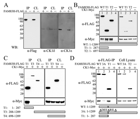 Figure 12. 