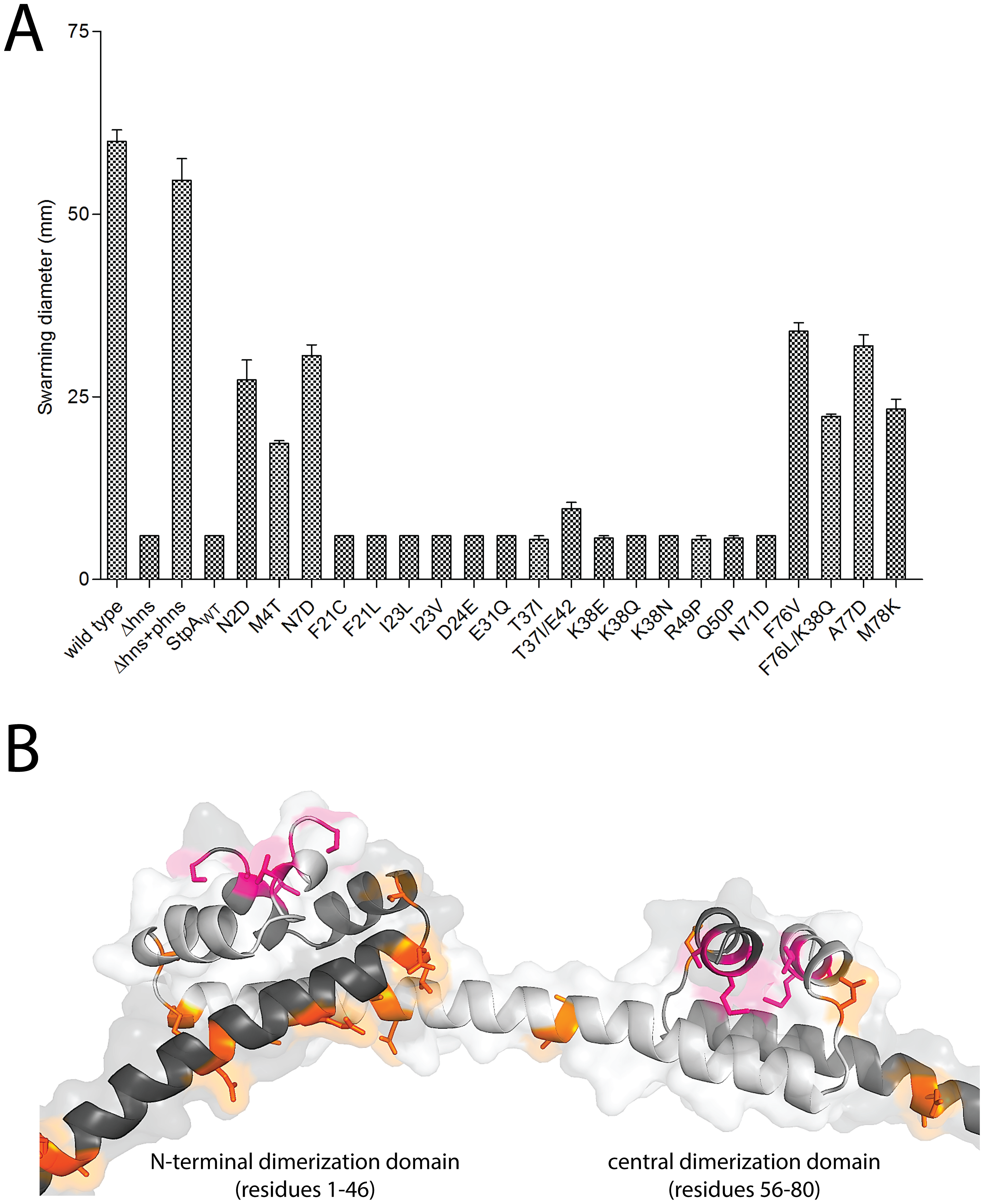 StpA mutants that partially restore the motility phenotype in <i>hns</i> mutants cluster in regions.