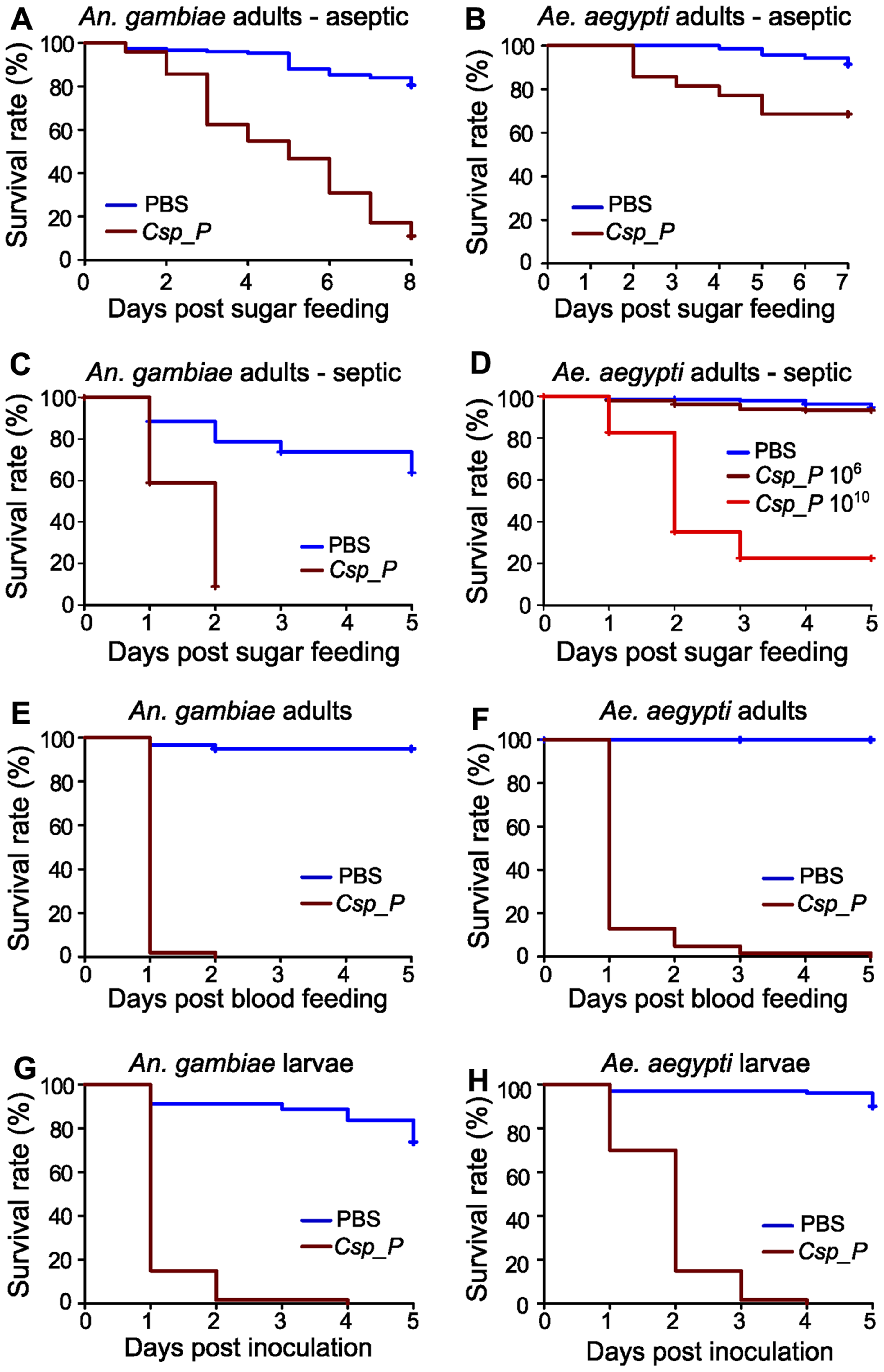 <i>Csp_P</i> exposure causes high mortality in adults and larvae.