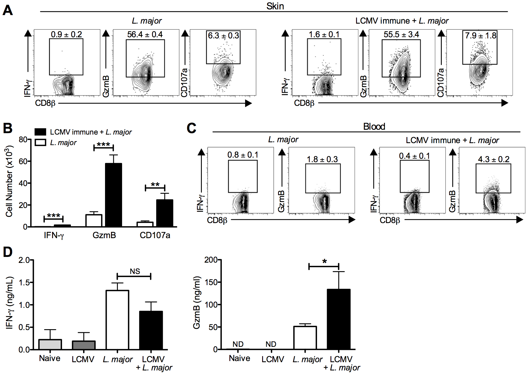 CD8 T cells infiltrating the leishmanial lesions express gzmB but low levels of IFN-γ.