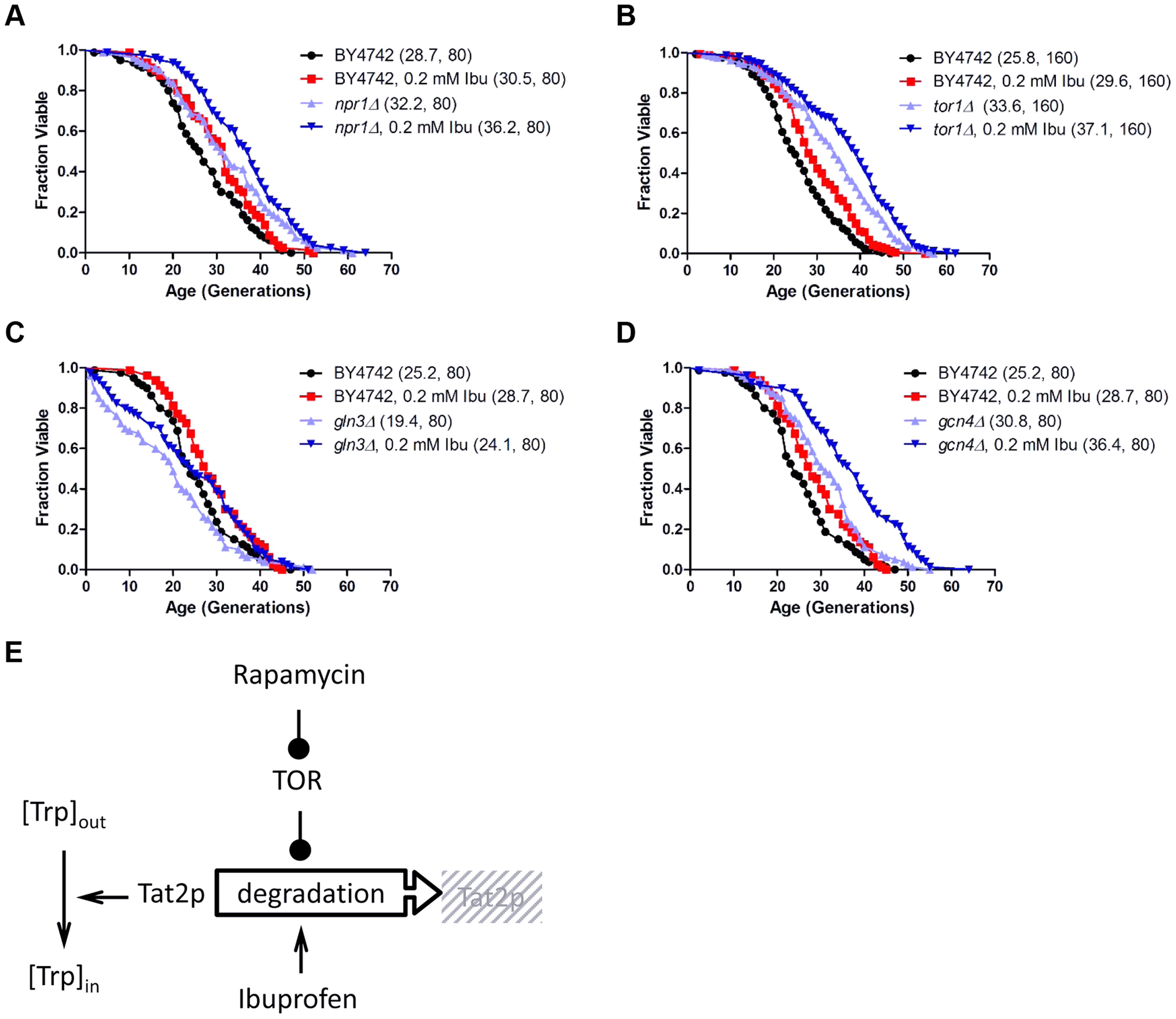 Ibuprofen extends RLS of TOR pathway mutants.