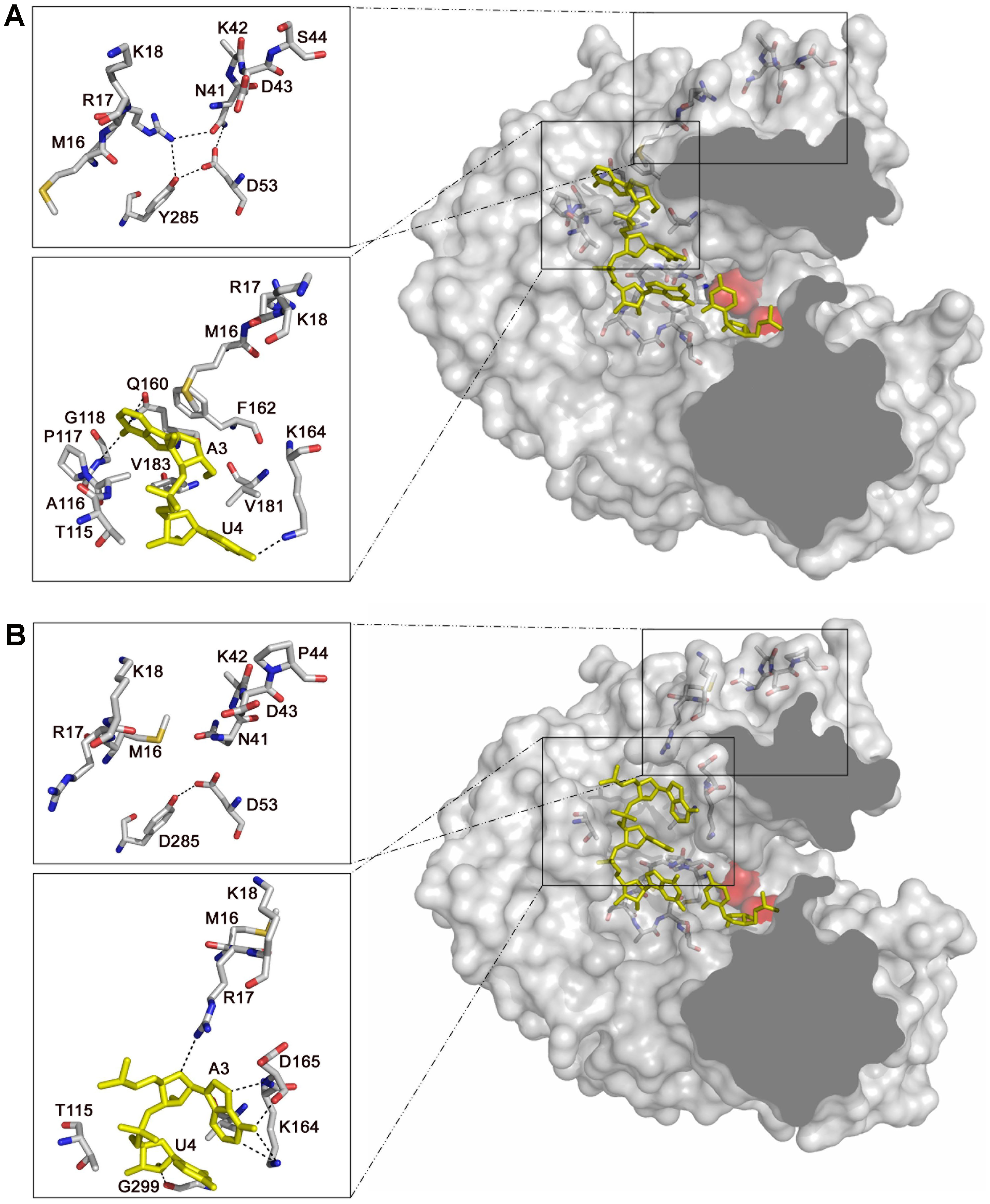 Structure and interactions in the template channel of the FMDV 3D polymerase.