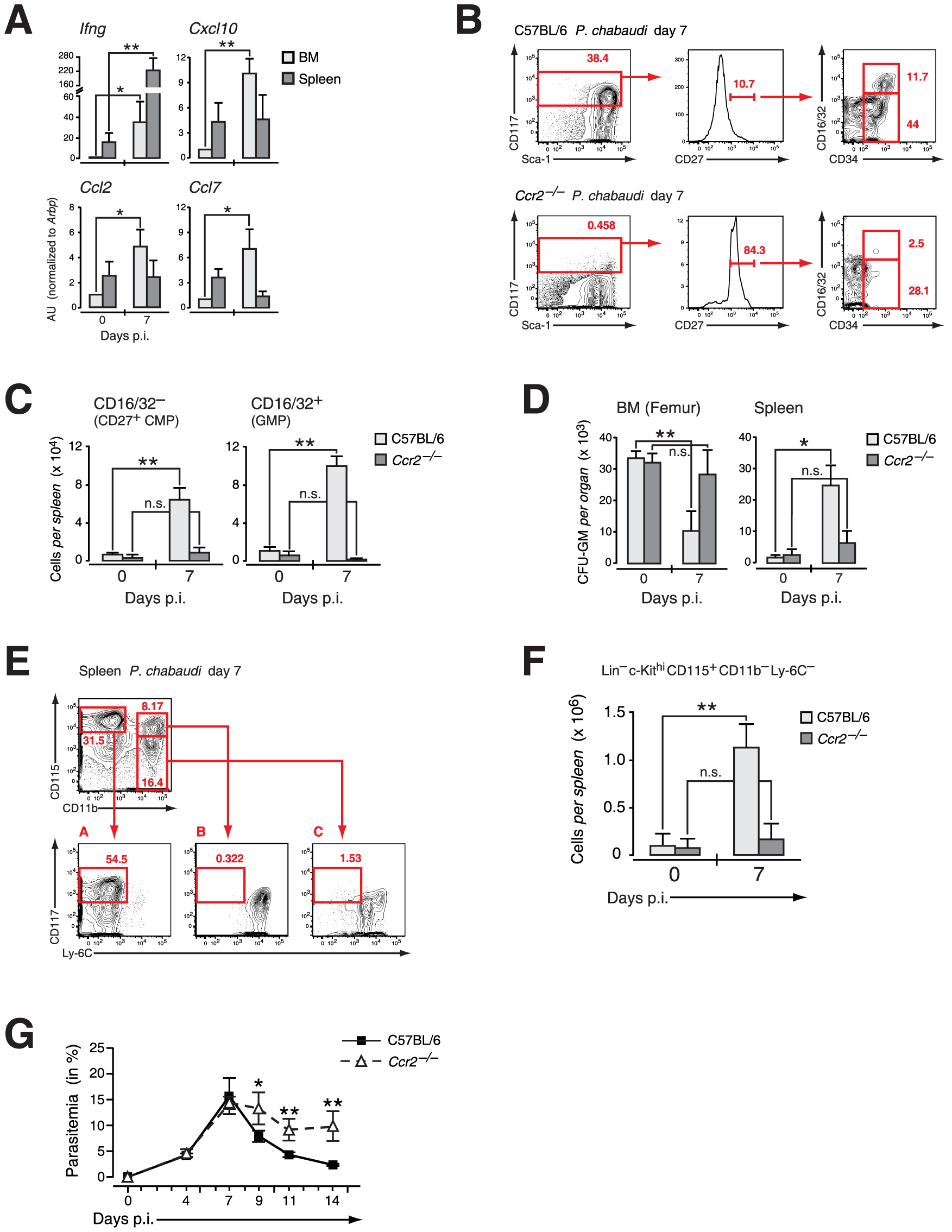 Extramedullary myelopoiesis in malaria is established by mobilizing CCR2<sup>+</sup> myeloid-restricted BM progenitors.