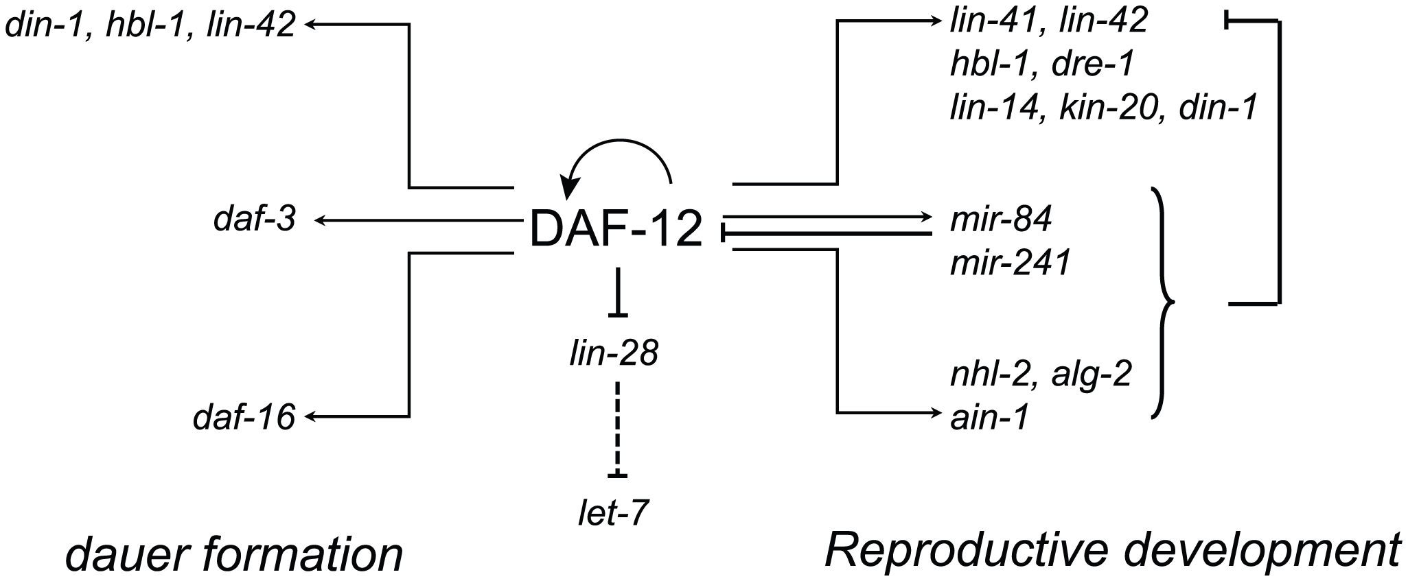 Multi-level control of genes involved in developmental decisions by DAF-12.