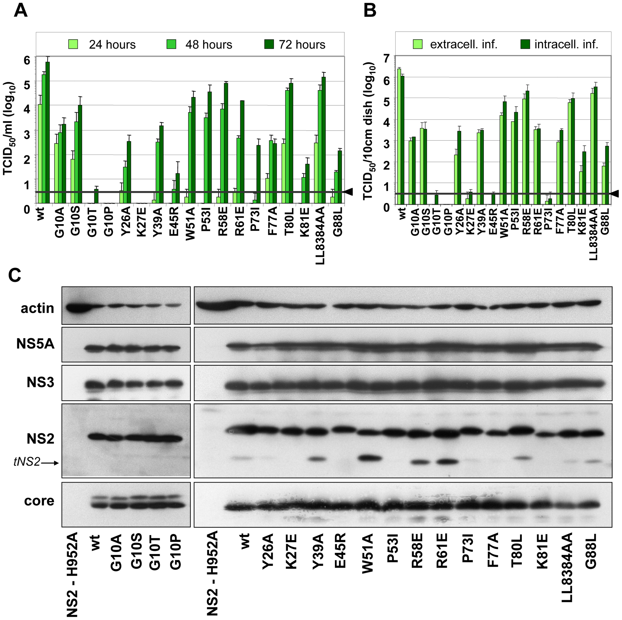 Mutation analysis of the NS2 membrane binding domain identifies amino acid residues that are crucial for efficient virus production.