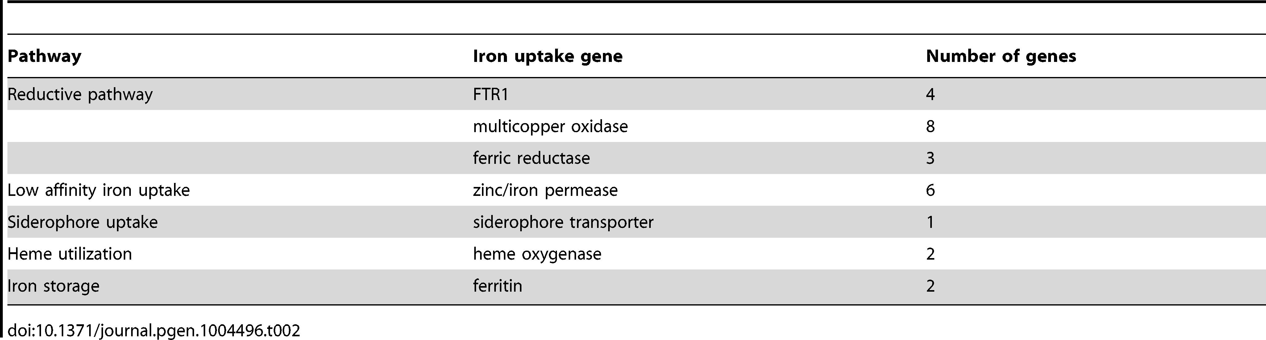 Iron uptake genes in the <i>L. corymbifera</i> genome.
