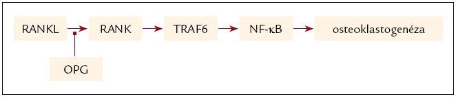 Aktivácia signálnej transdukčnej cesty väzbou RANKL na RANK a jej inhibícia sprostredkovaná OPG.