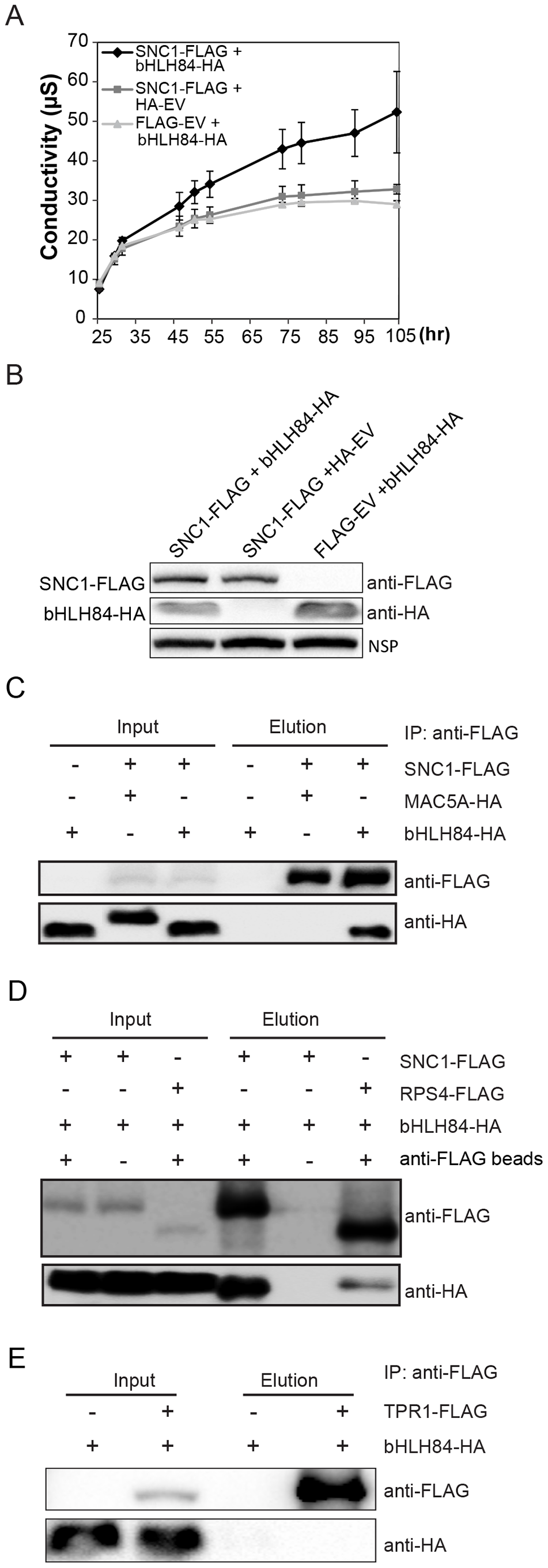 bHLH84 interacts with SNC1 or RPS4 <i>in planta</i>.