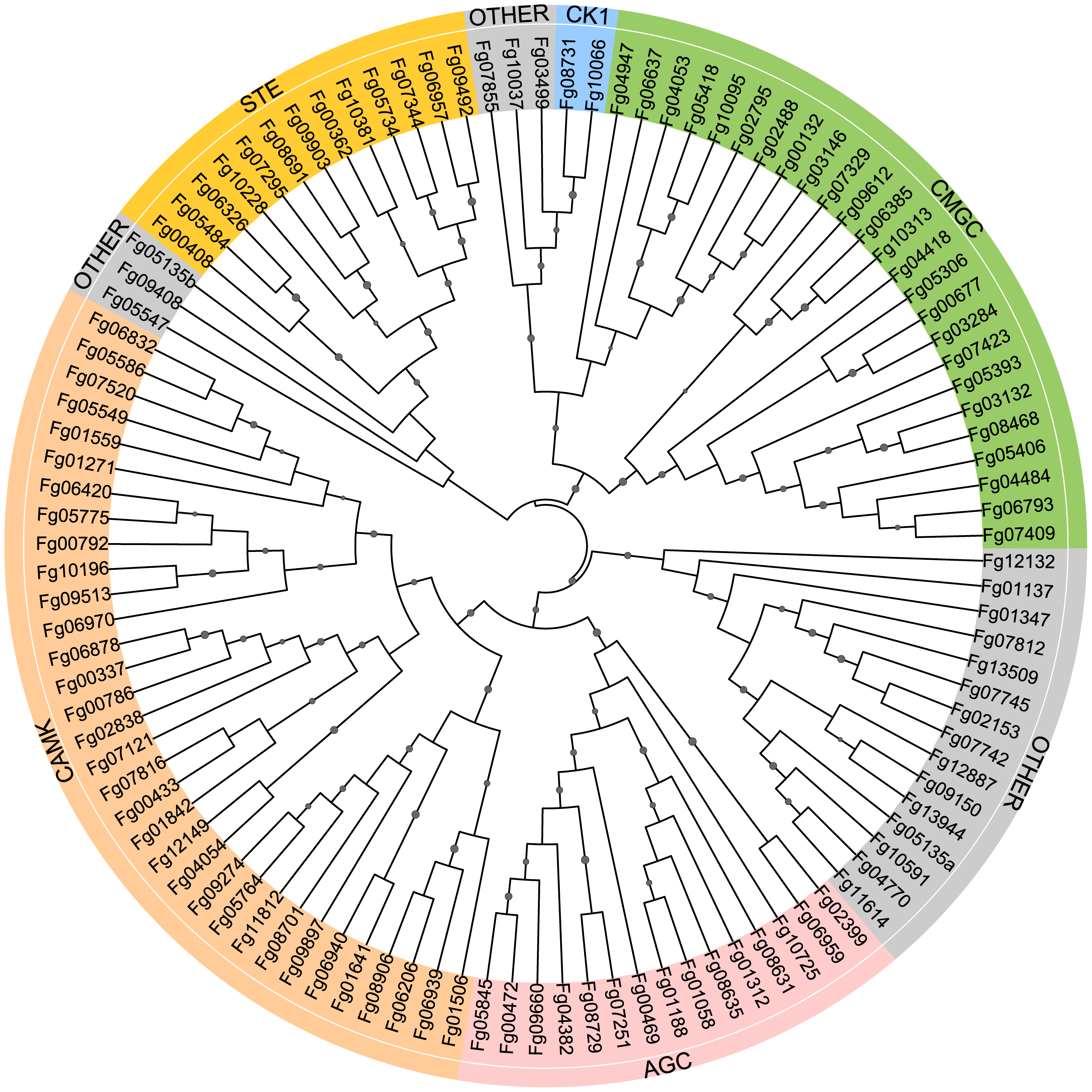 Phylogenetic analysis with the conventional protein kinase (ePK) genes of <i>Fusarium graminearum.</i>