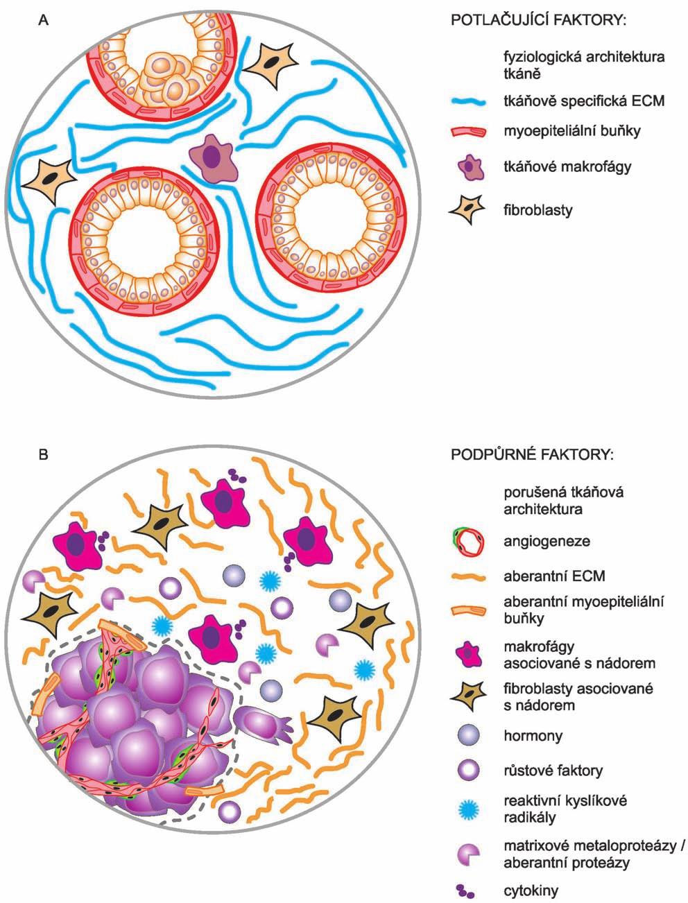 Teorie pole tkáňové organizace.