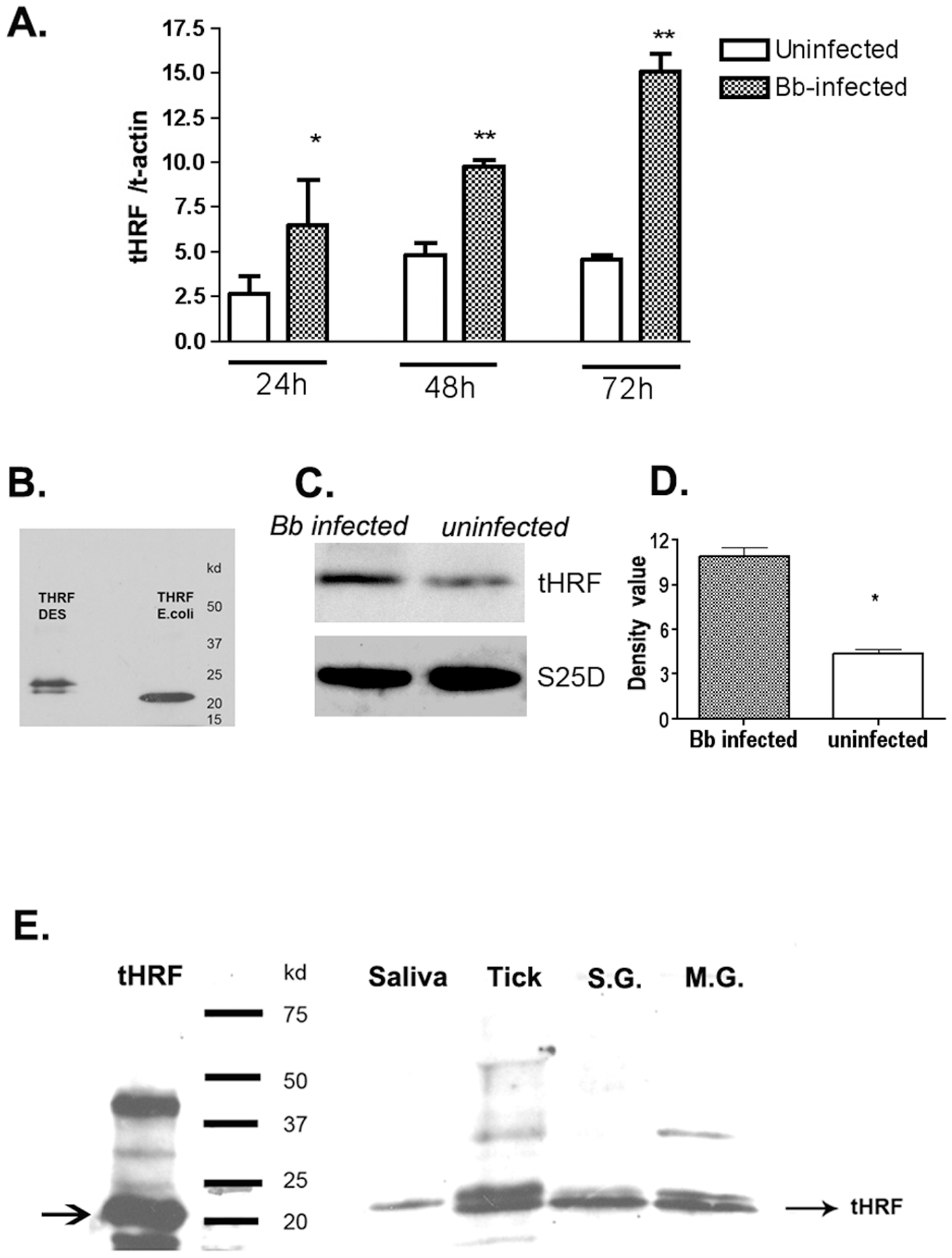 Tick histamine release factor (tHRF) was up-regulated in <i>B. burgdorferi</i>- infected ticks.