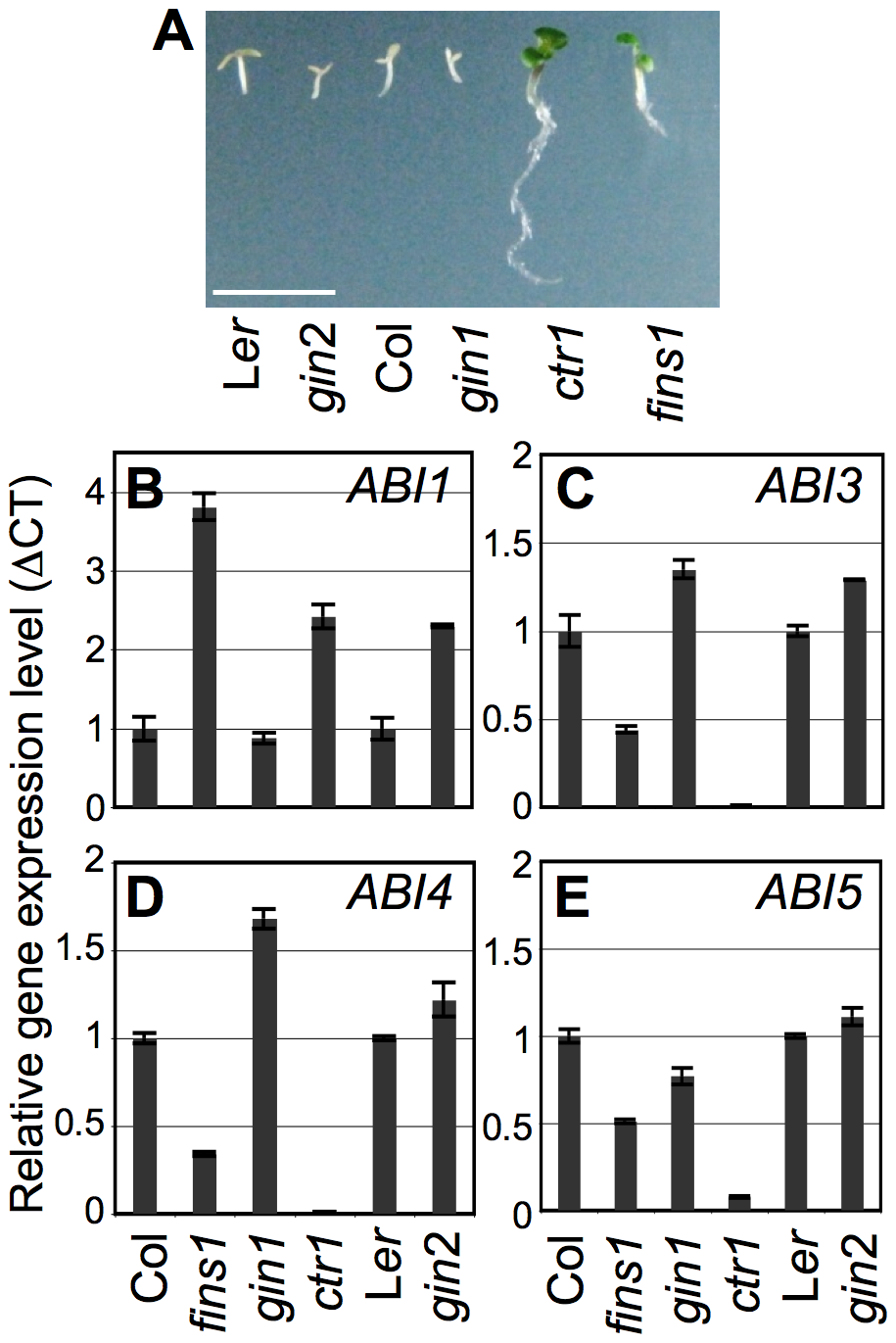 Function of FINS1 in ABA signaling.