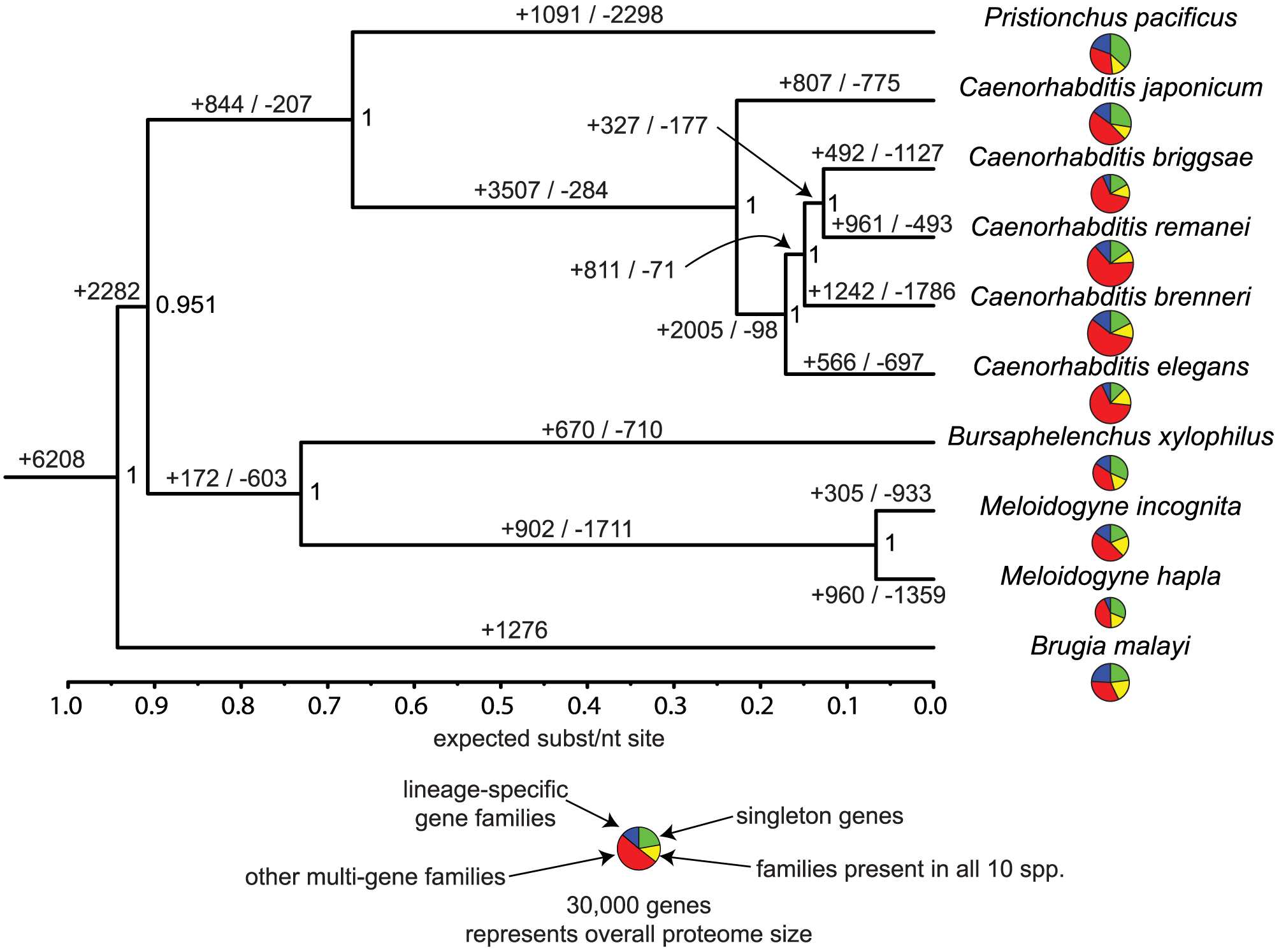 Evolutionary dynamics of gene families in nematodes.