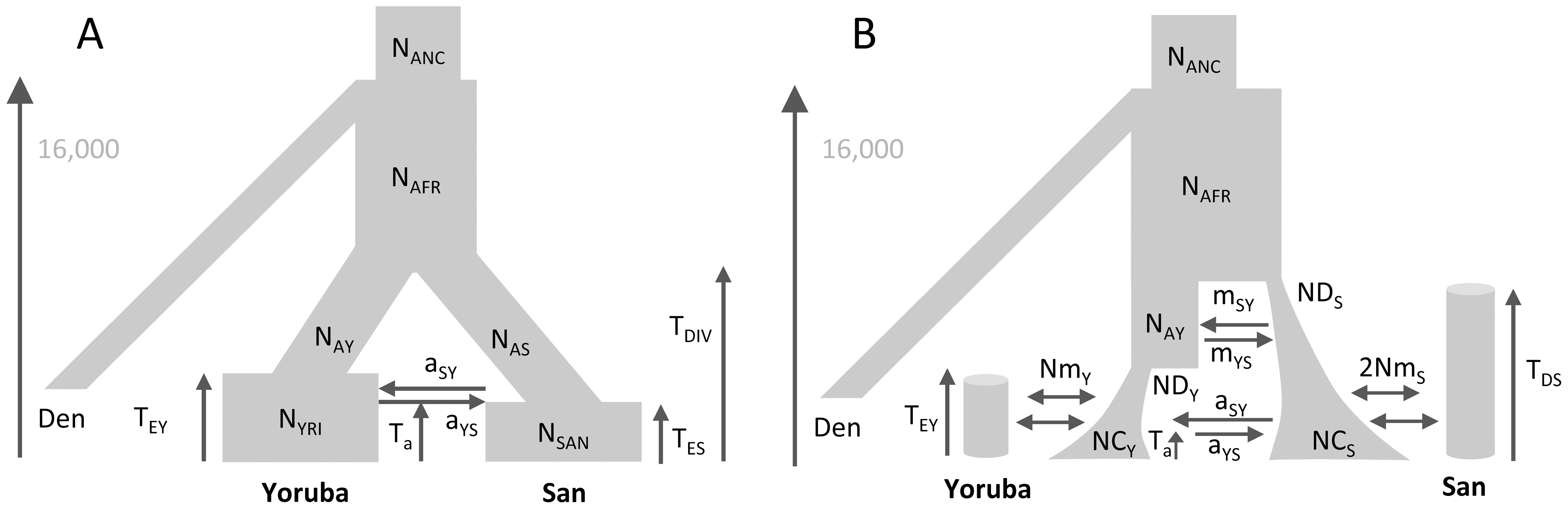 Alternative demographic models for two African populations.