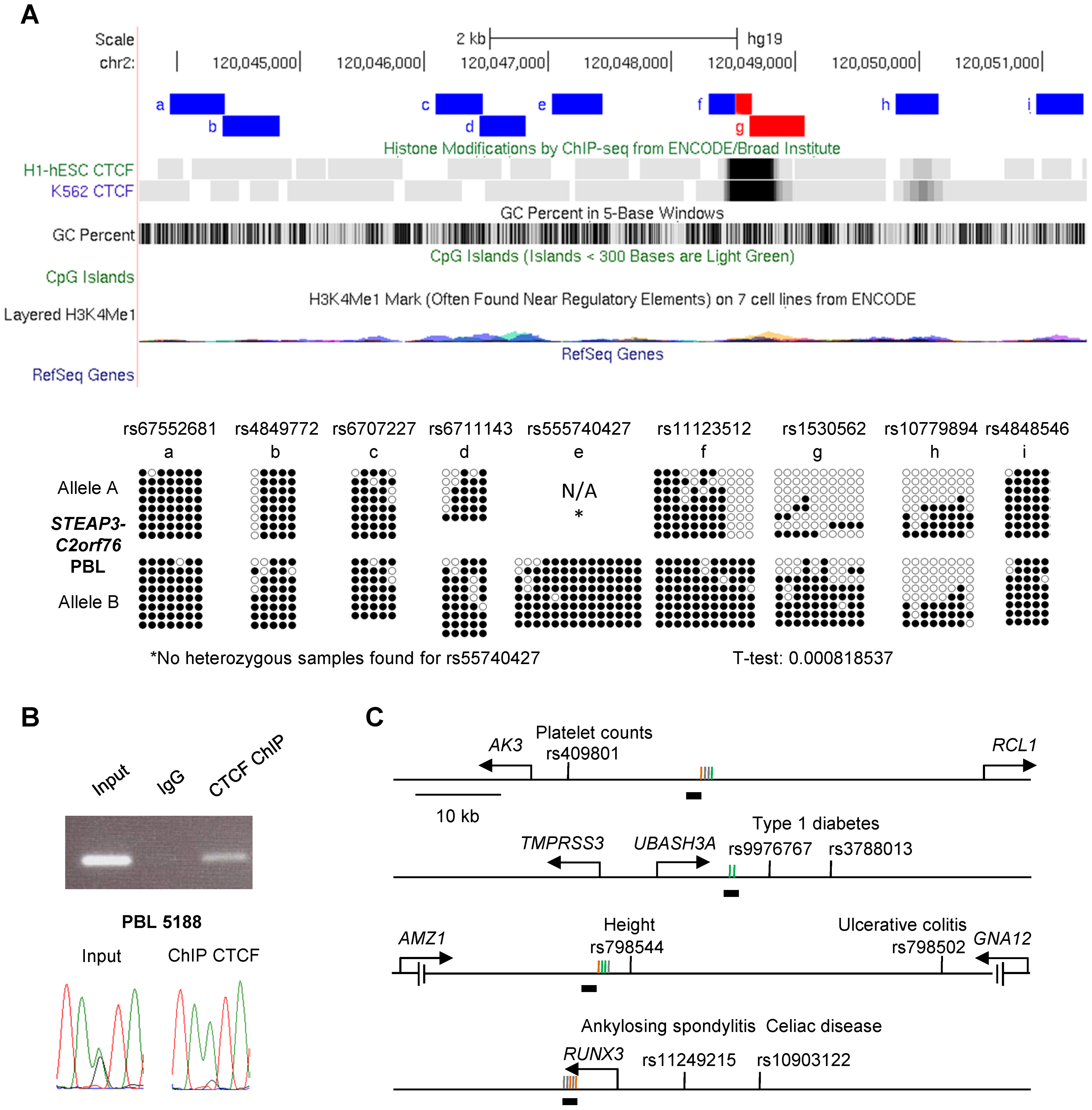 The <i>STEAP3-C2orf76</i> DMR with non-imprinted ASM overlaps a CTCF site, with CTCF preferentially bound to the unmethylated allele, and cross-indexing of ASM-associated CTCF sites with GWAS peaks provides evidence for regulatory haplotypes.