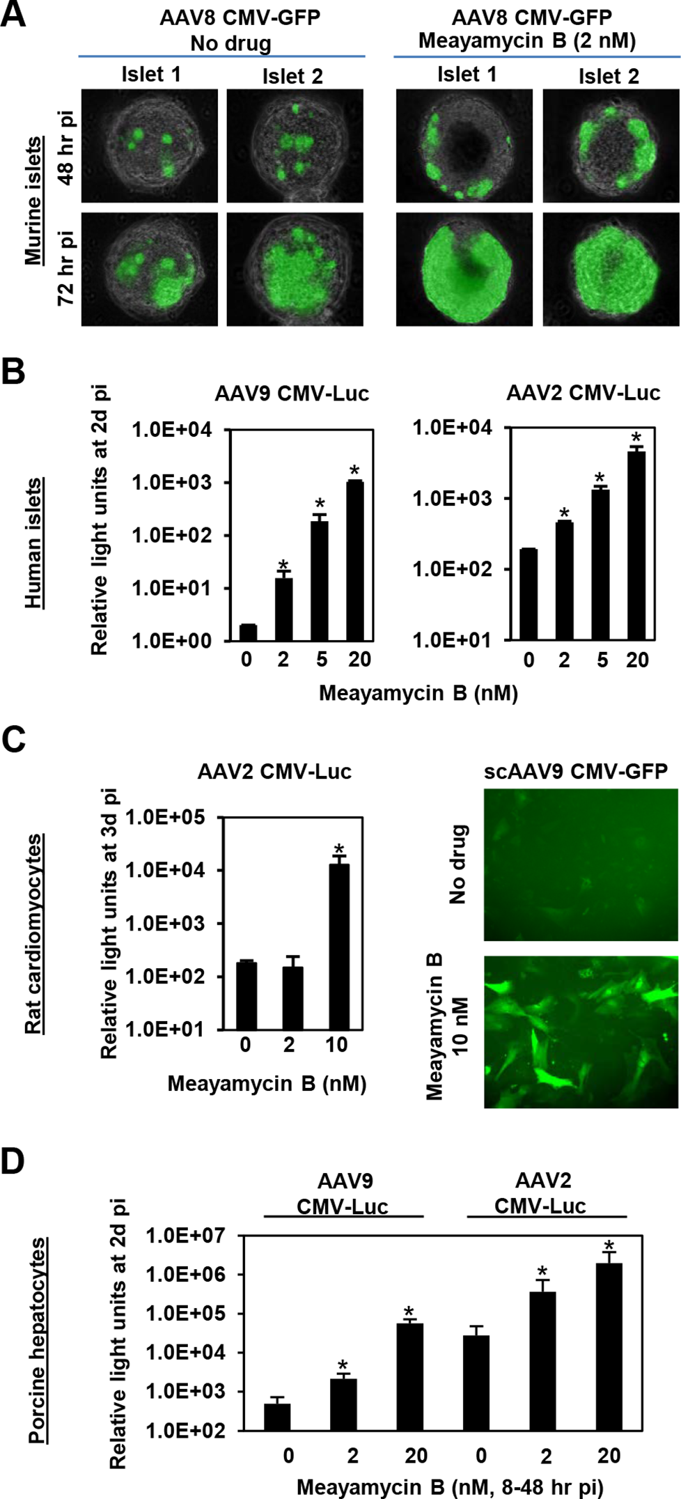 Meayamycin B increases AAV vector transduction of clinically relevant cell types.