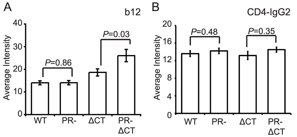 Binding of IgG1 b12 and CD4-IgG2 to HIV-1 particles.