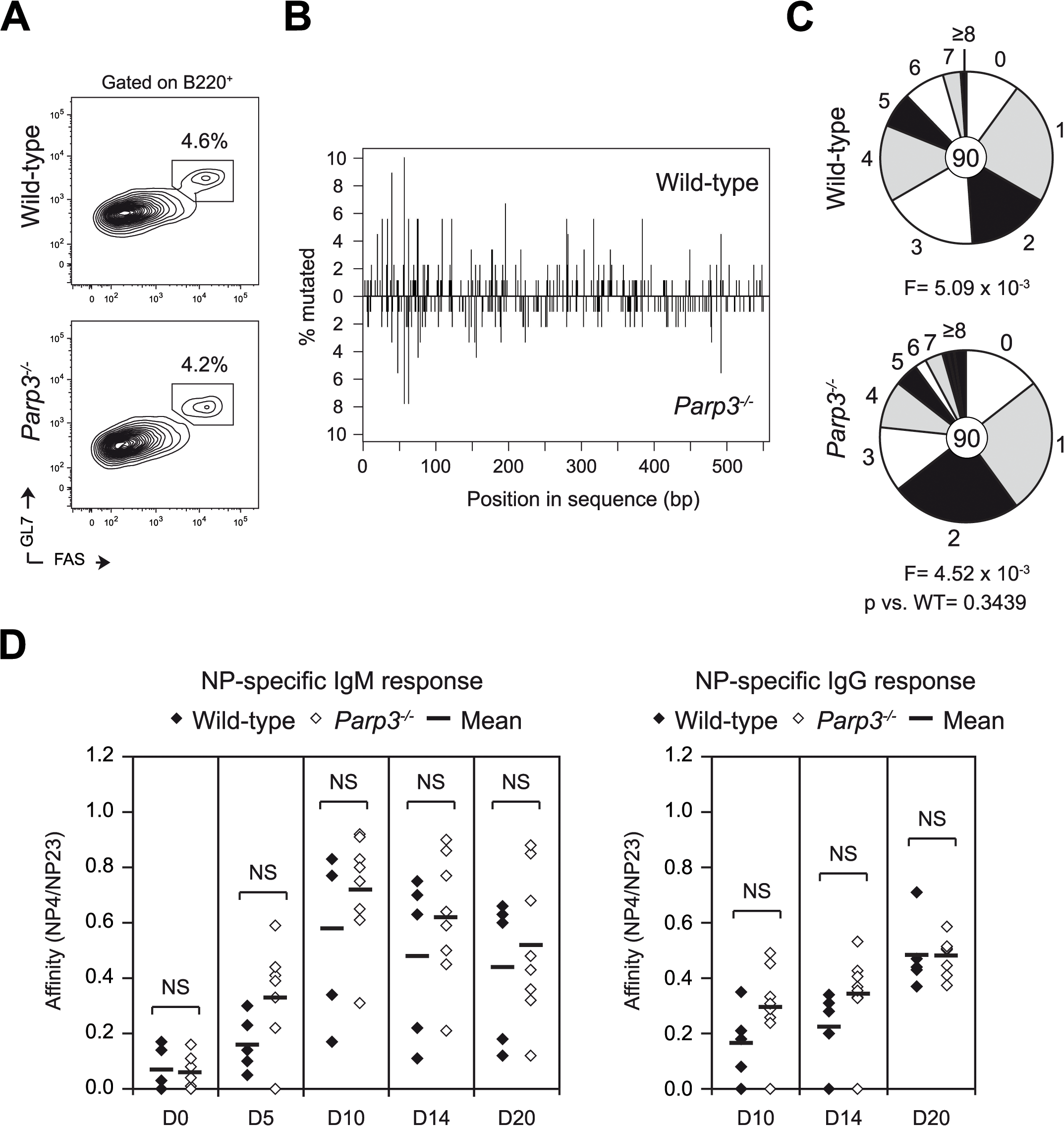 Parp3 is dispensable for SHM and affinity maturation.