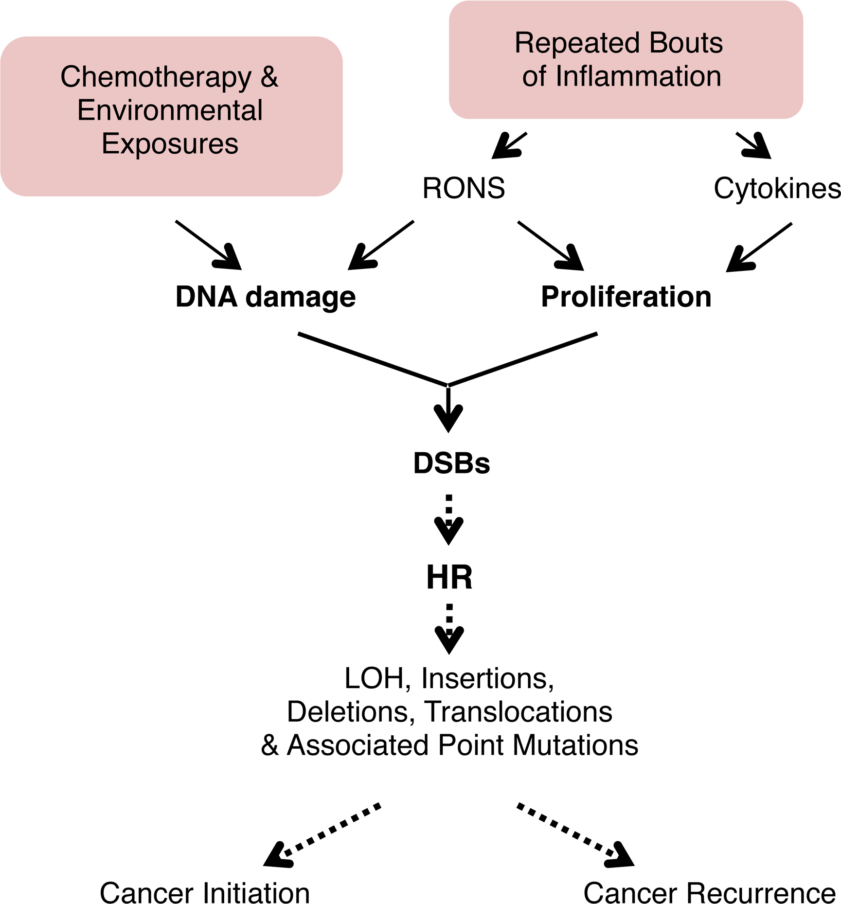 Model for the potentiation of sequence rearrangements induced by endogenous and exogenous DNA damage by inflammation-associated cell proliferation.