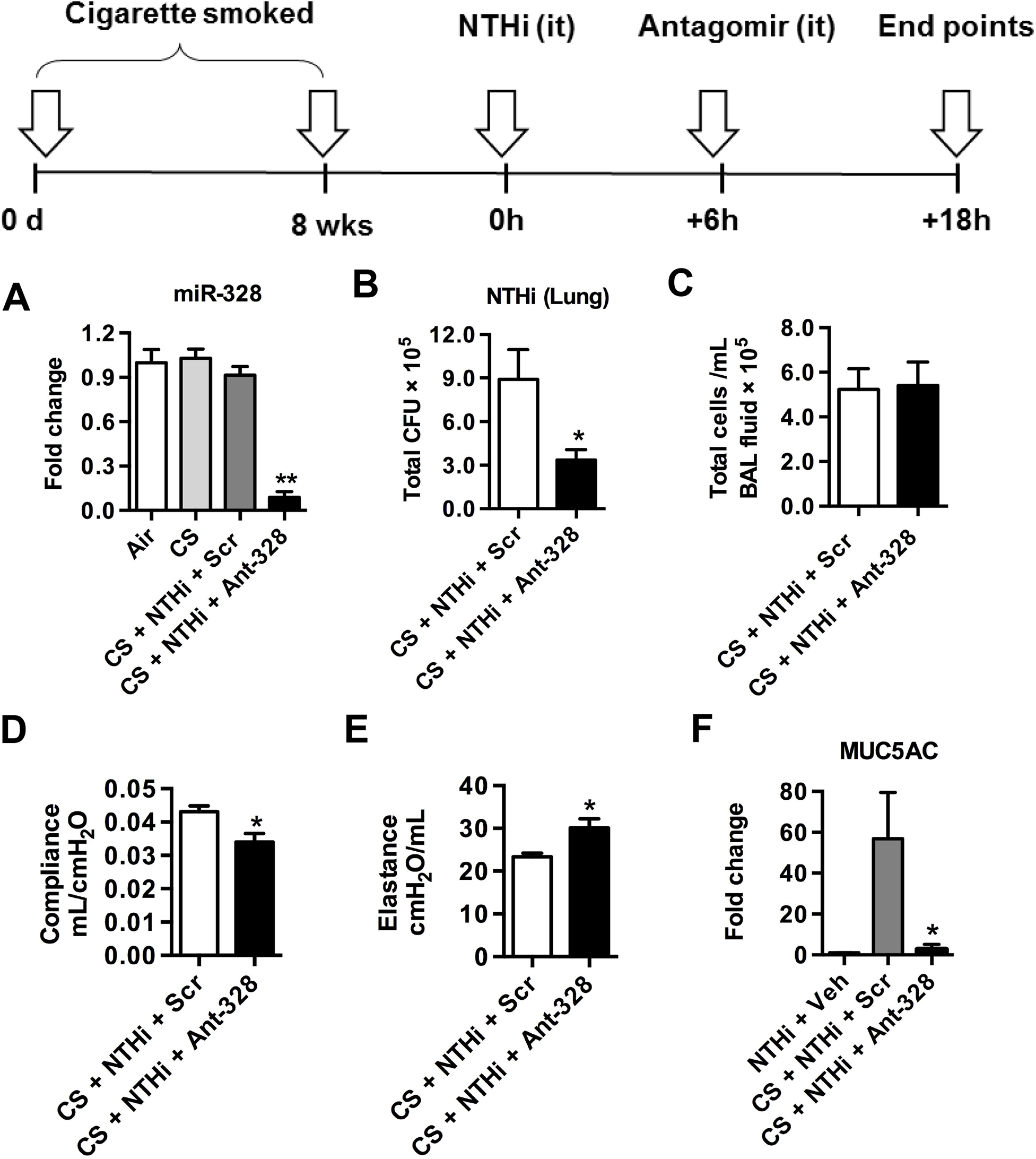 Inhibiting miR-328 enhances bacterial clearance in cigarette smoke-exposed mice.