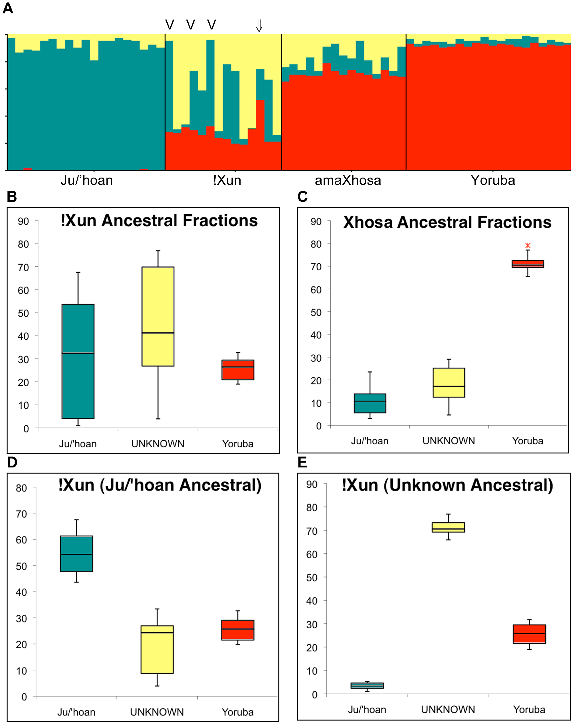 Ju/'hoan-Yoruba ancestry informative markers (AIMs) defined ancestral contributions to the !Xun and amaXhosa, providing evidence for two distinct !Xun lineages with differing ancestral contributions.