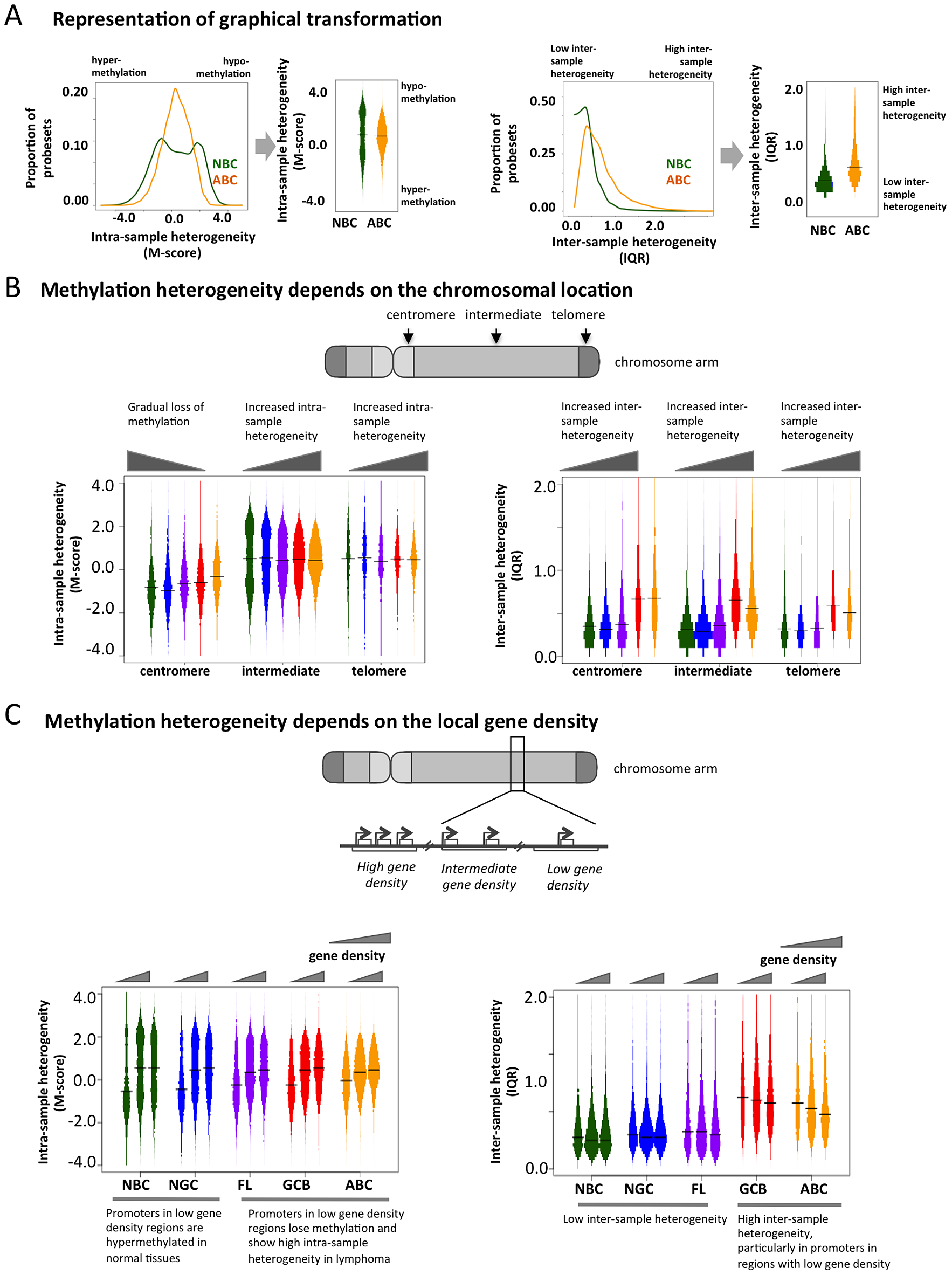 Genome-wide patterns of aberrant methylation.