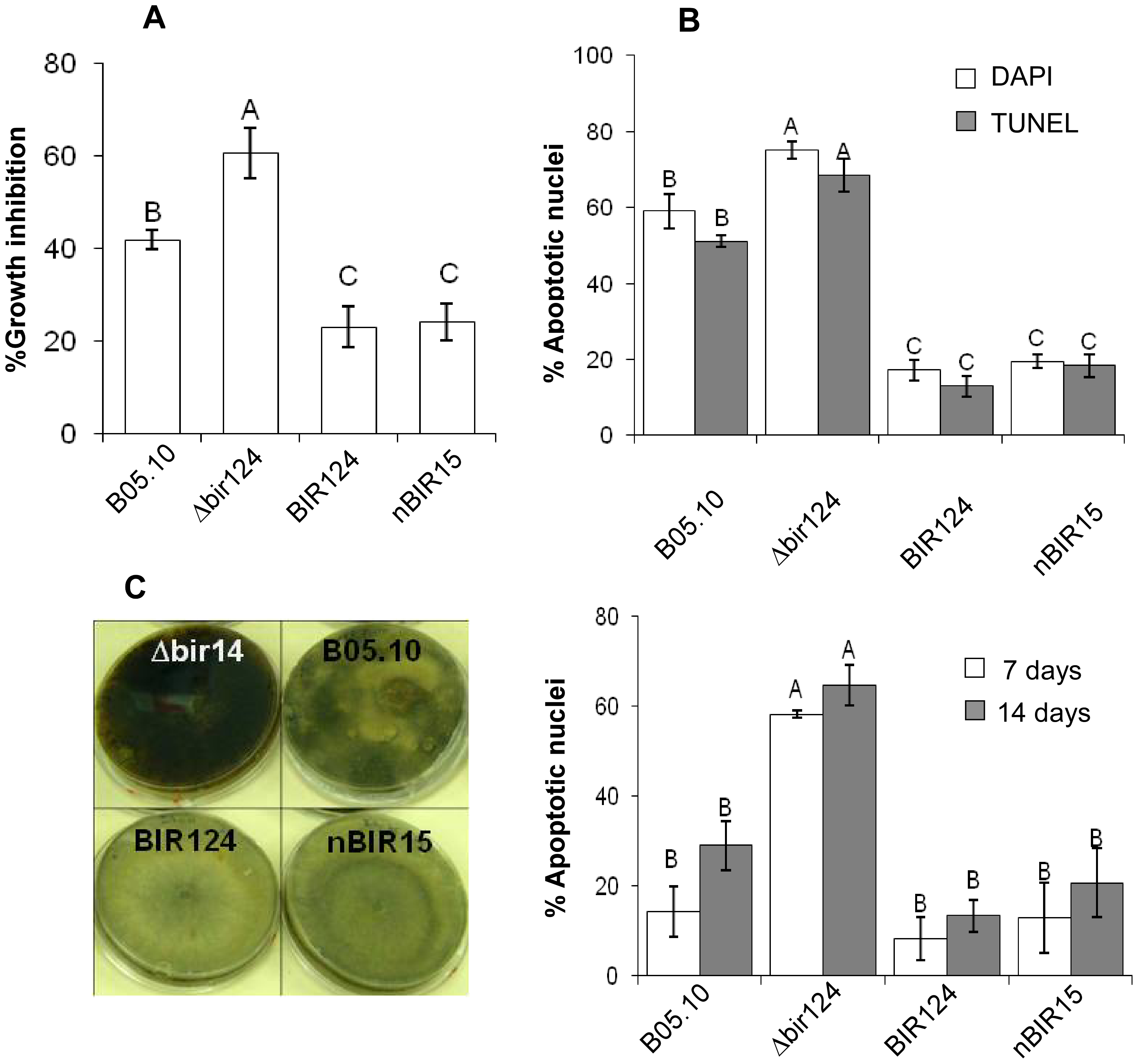 <i>BcBIR1</i> encodes a protein with anti-apoptotic activity.