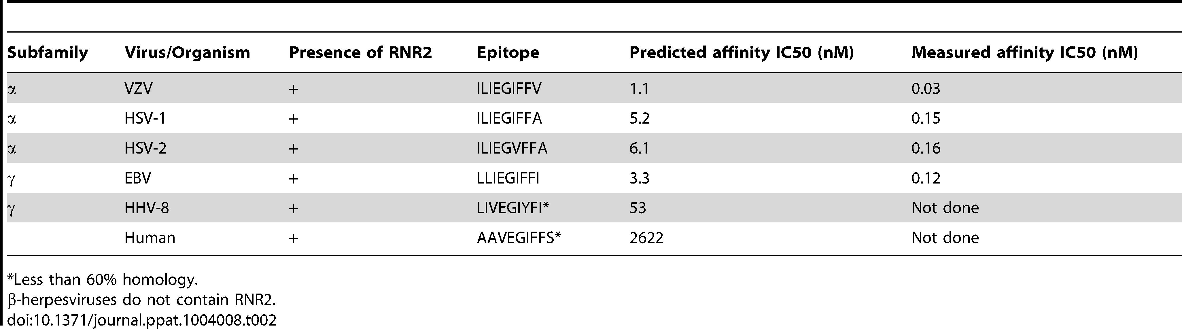 RNR2 epitope homologues in human herpesviruses.